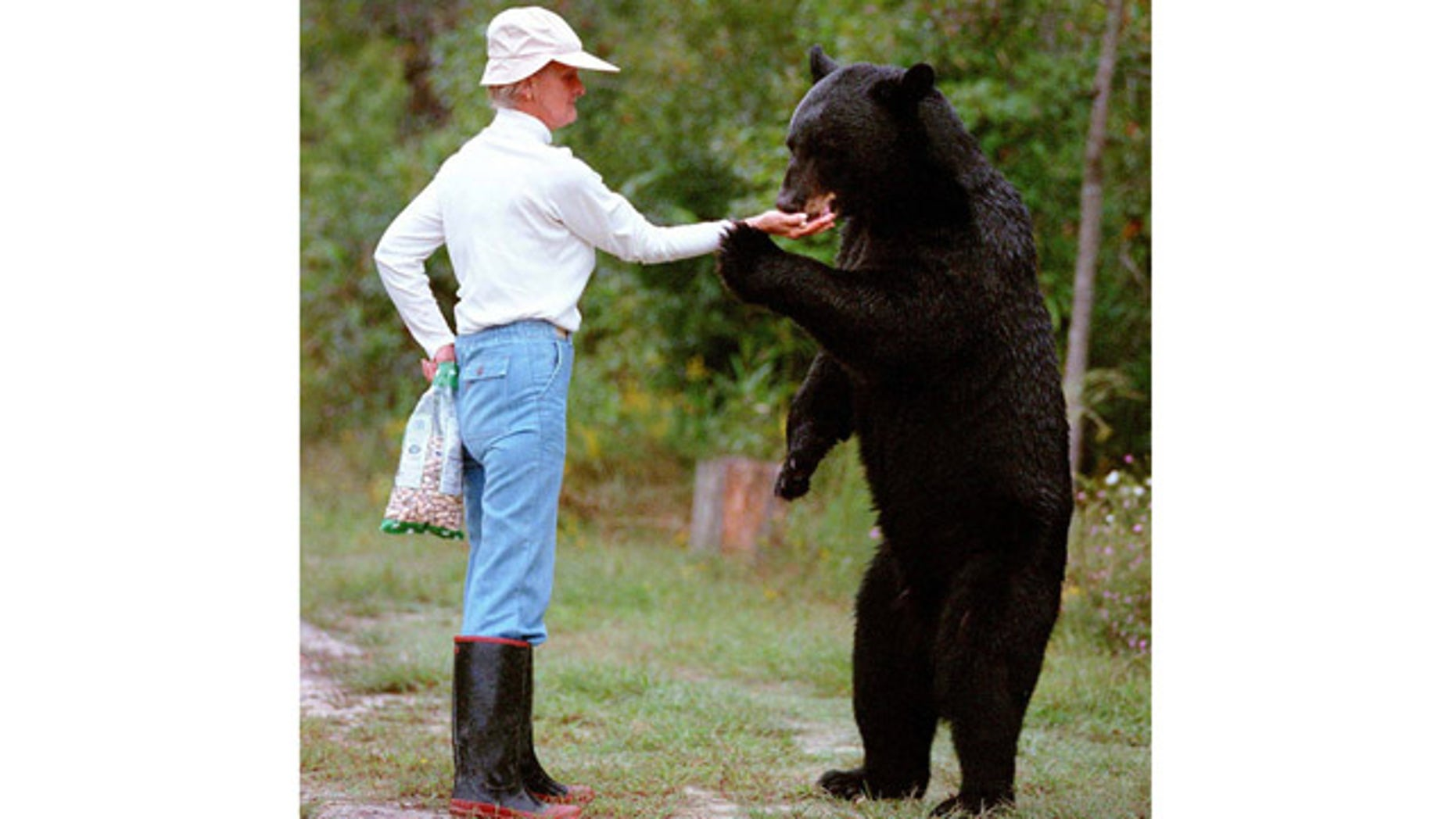 """This 1997 file photo, provided by The Virginia-Pilot, shows Kay Grayson feeding a 400-pound black bear she called """"64"""" from her hand."""