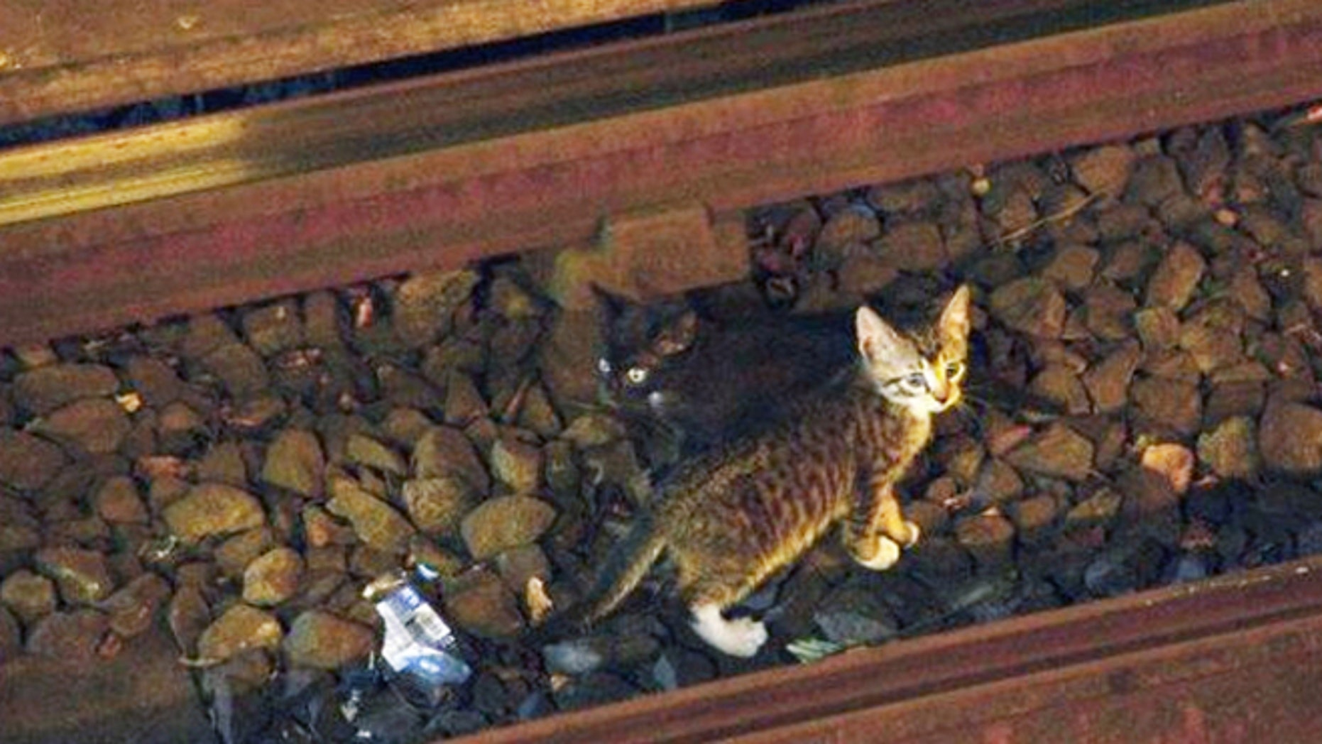 Aug. 29, 2013: Two kittens stand between the rails on subway tracks in the Brooklyn borough of New York.