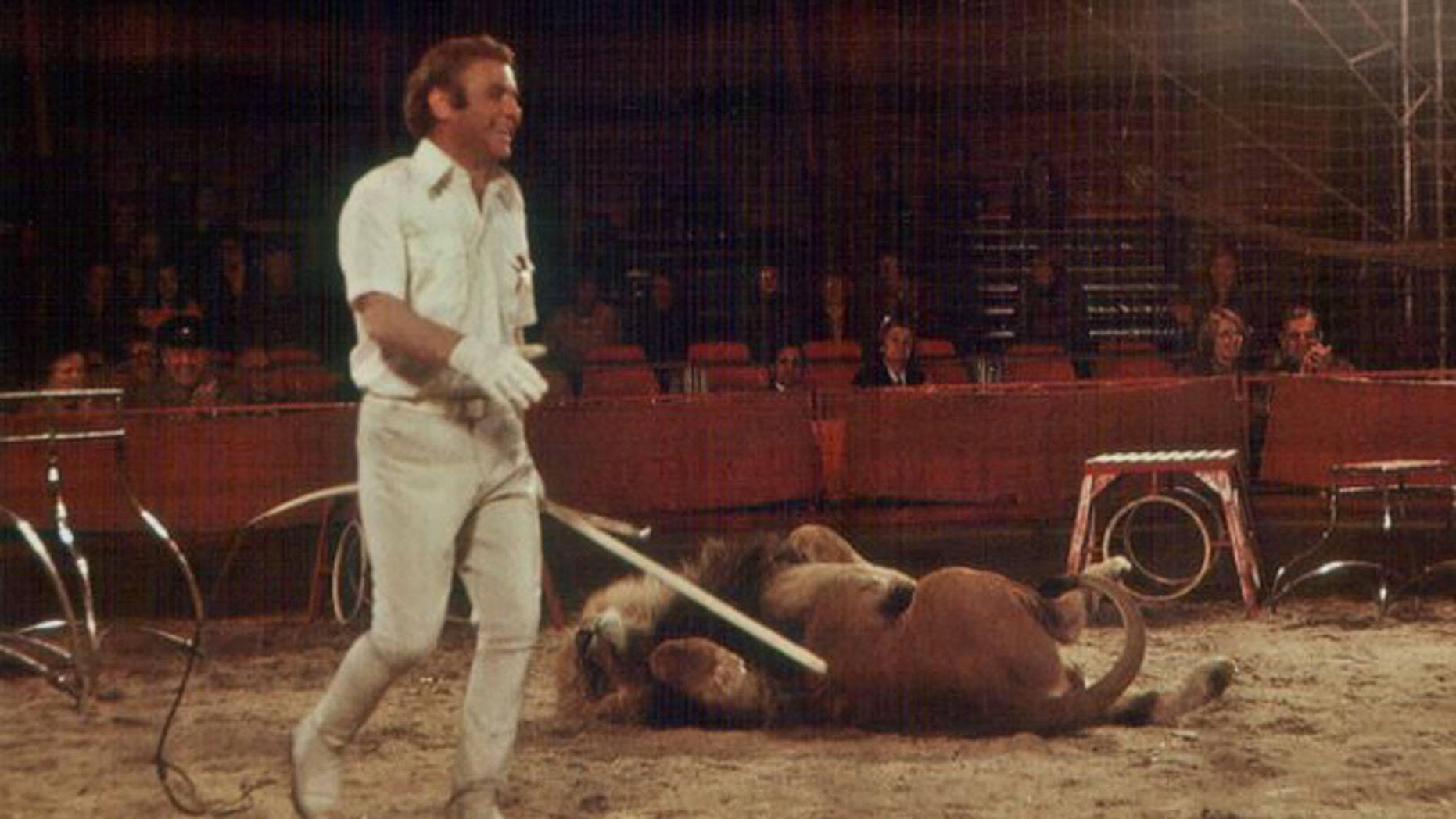 Lion tamer and circus director Gerd Siemoneit-Barum has a laugh in 1977. But in the future, U.K. circuses may not be able to have such displays, thanks to new legislation.