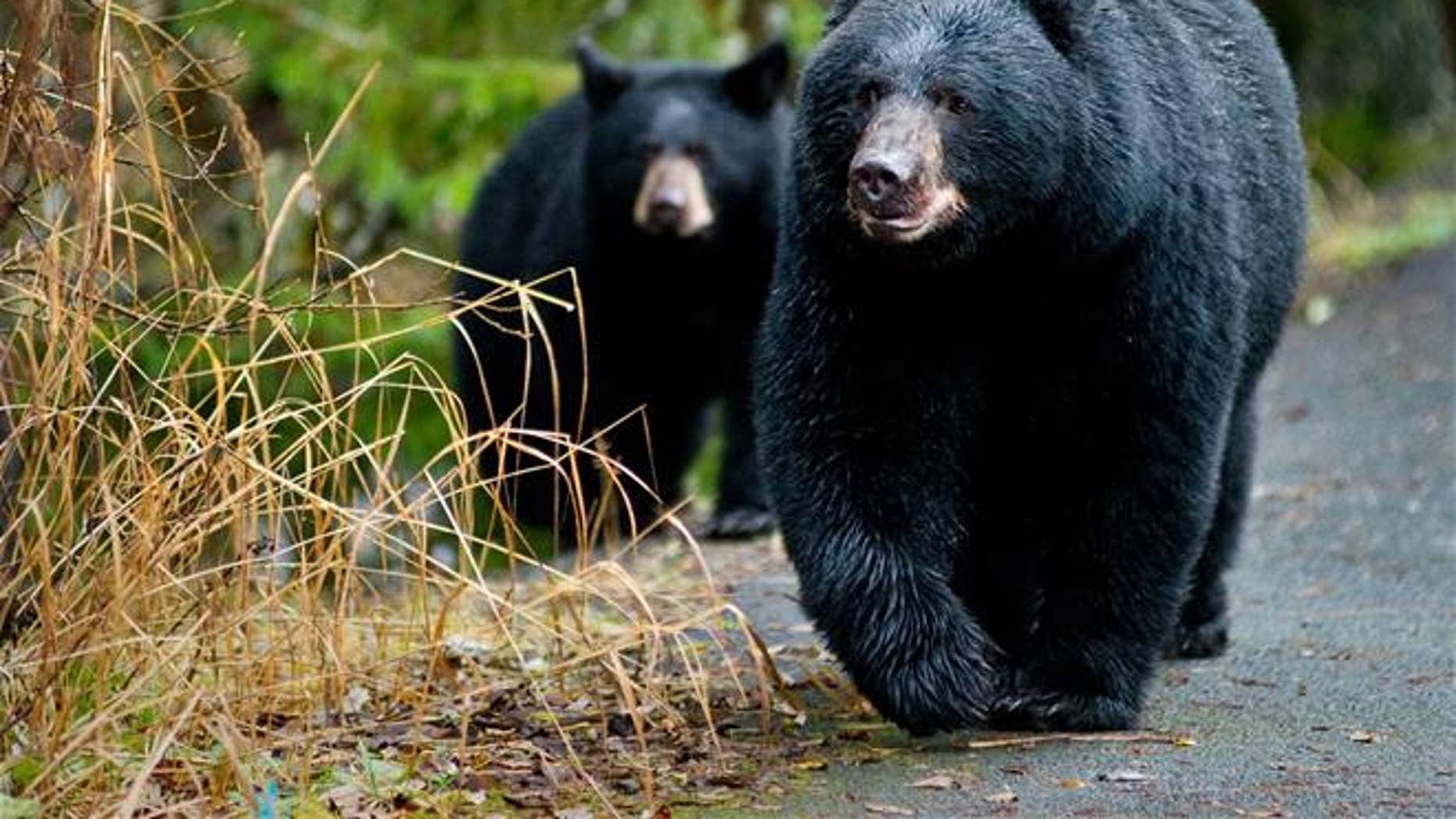 """You don't want to find yourself between a bear and its mate when it's """"business time."""""""