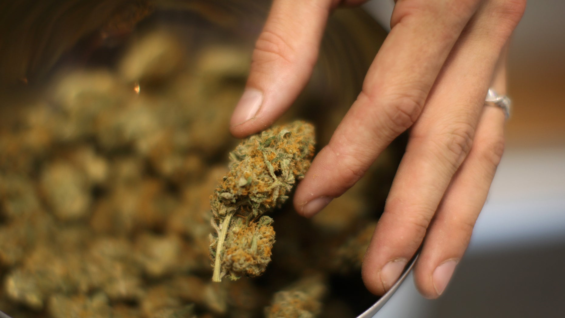 LOS ANGELES, CA - SEPTEMBER 7:  A budtender handles marijuana at Perennial Holistic Wellness Center, a not-for-profit medical marijuana dispensary in operation since 2006, on September 7, 2012 in Los Angeles, California. A group of activists have submitted about 50,000 signatures in an effort to force a referendum on a marijuana dispensary ban in Los Angeles to take effect next week. A minimum of 27,425 valid signatures from registered voters is needed to let voters decide on the issue in March, and until the number can be verified, the ban will not be enforced. . The ban would not prevent patients or cooperatives of two or three people to grow their own in small amounts. Californians voted to legalize medical cannabis use in 1996, clashing with federal drug laws.   (Photo by David McNew/Getty Images)