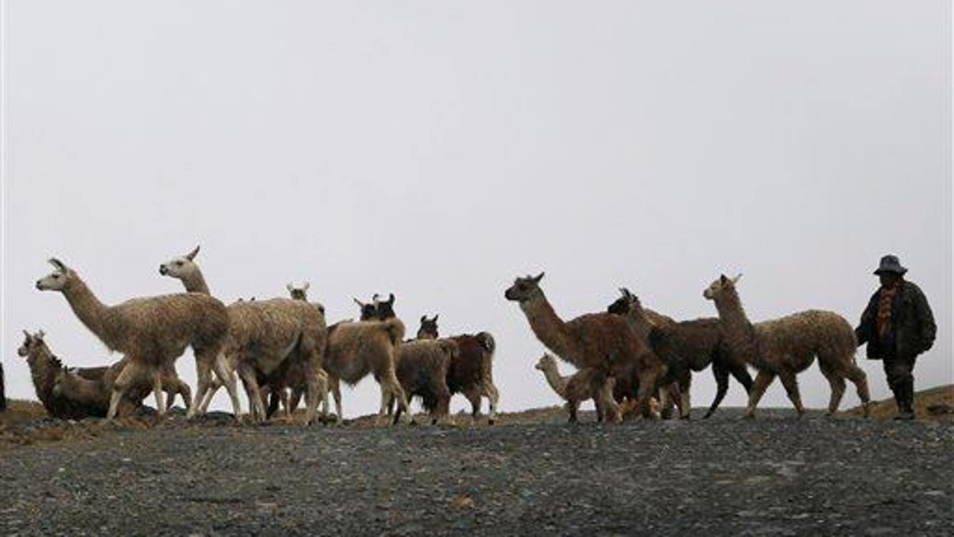 At least 42 children, 76 llamas killed in possible offering to the sea 600 years ago.