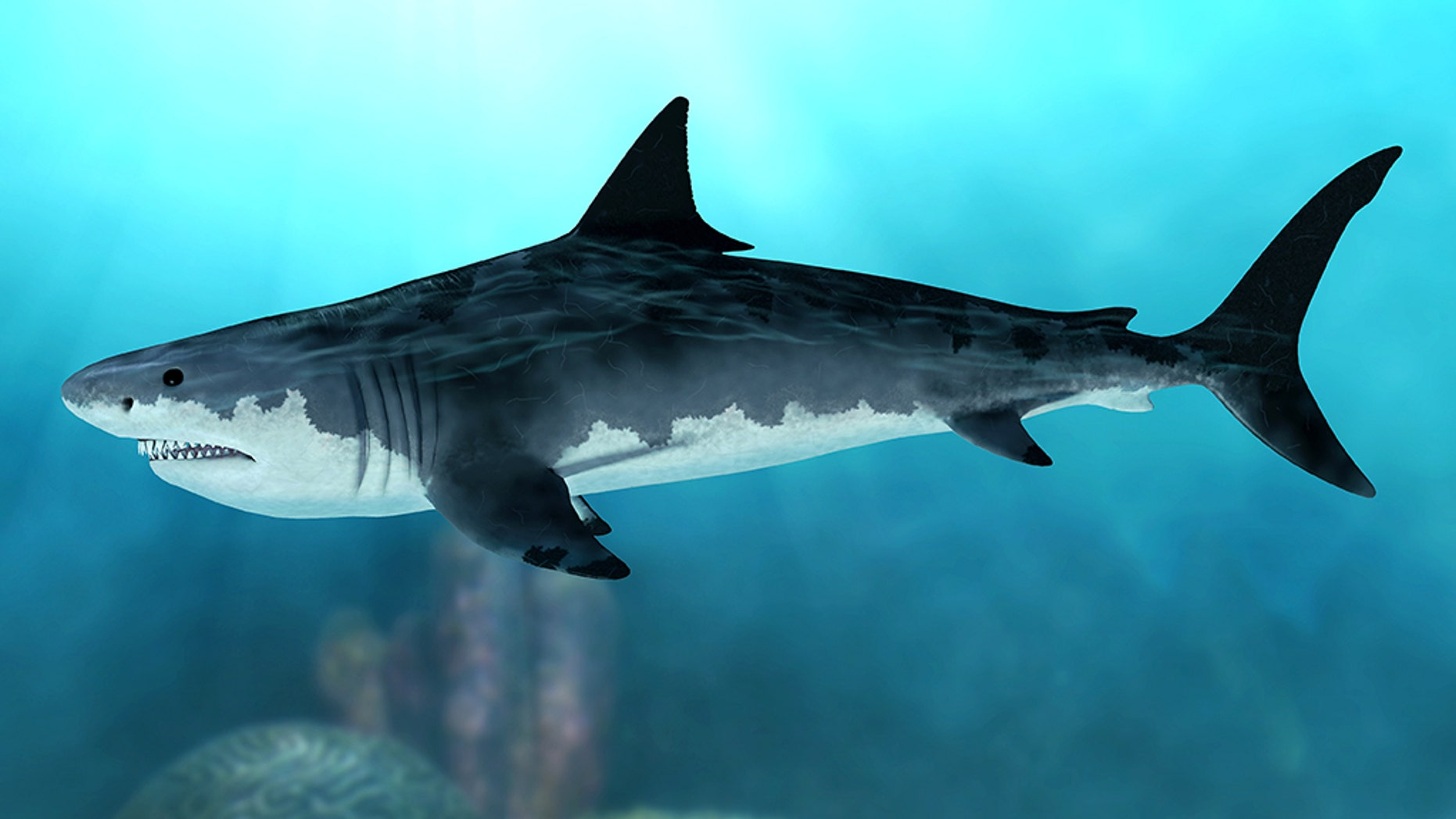 3D rendering of an extinct Megalodon shark in the seas of the Cenozoic Era.
