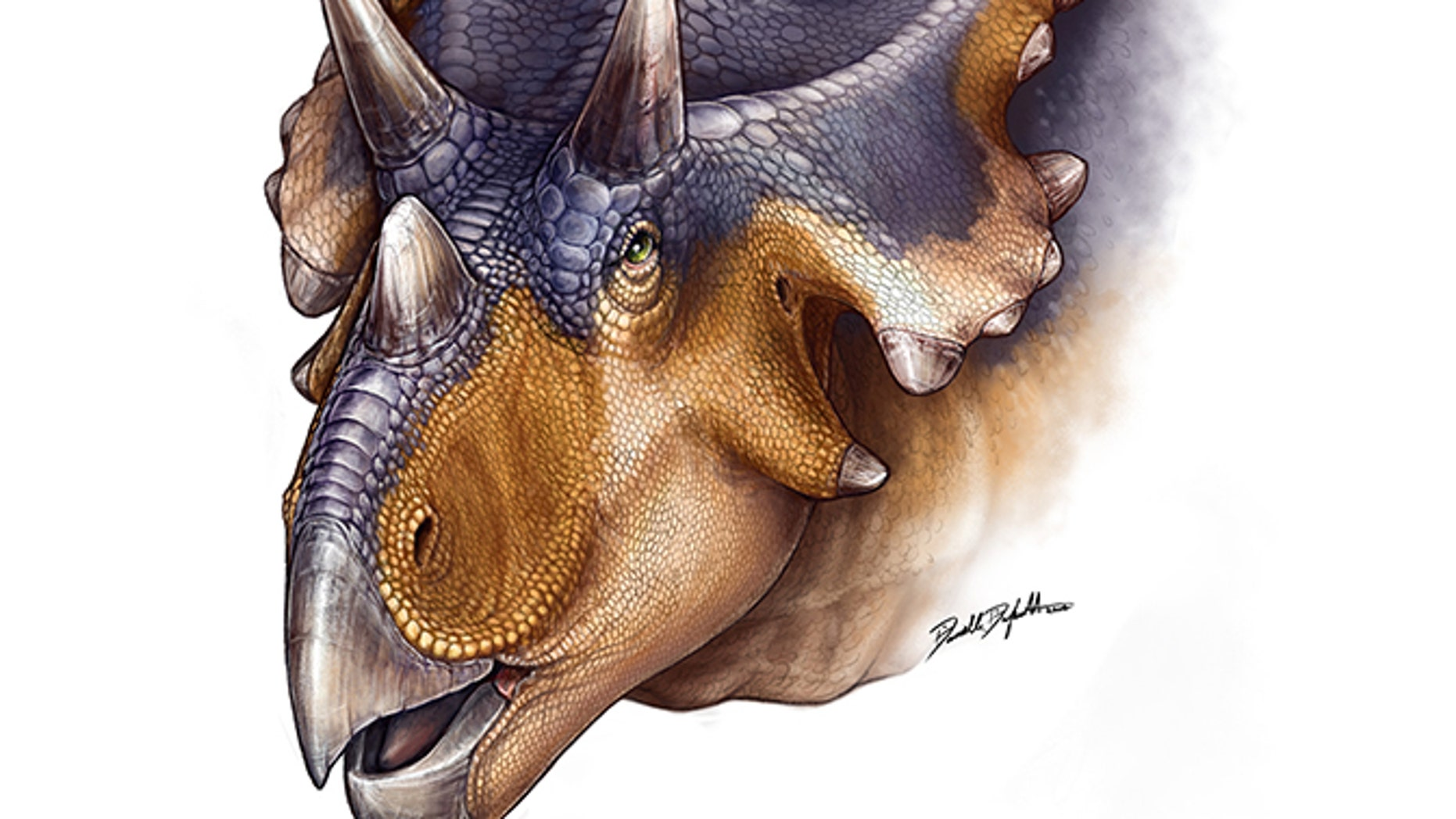 Artist reconstruction of Mercuriceratops gemini.