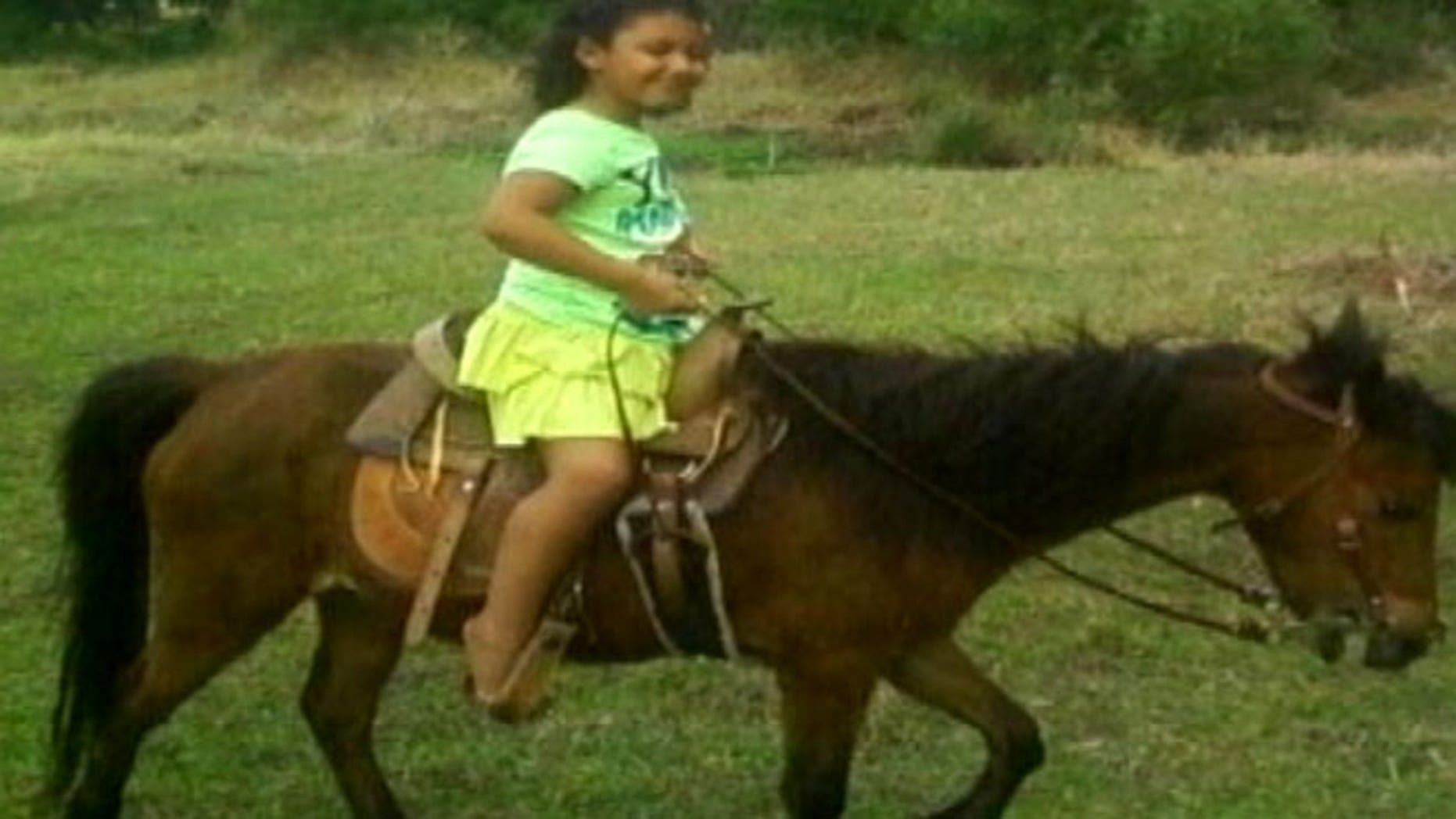 FILE: A miniature horse was attacked in Florida after two dogs managed to dig under a protective fence.