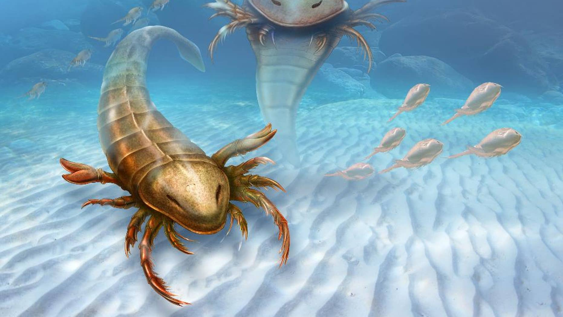 This rendering provided by Yale University shows a Pentecopterus decorahensis. Earth's first big predatory monster was a weird water bug, newly found fossils show. Almost half a billion years ago, Earth's dominant large predator was a sea scorpion that grew to 5 feet 7 inches with a dozen claw arms sprouting from its head and a spike tail, according to a new study. (Patrick J. Lynch/Yale University via AP)