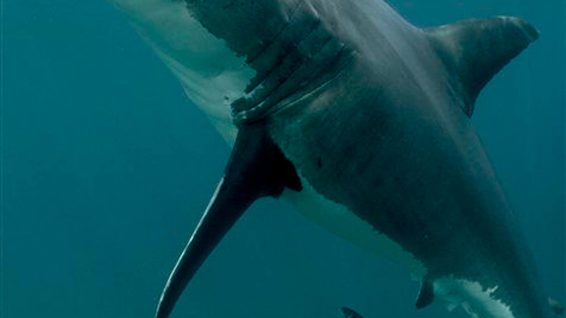 A possible friend of Katharine's is seen off New Zealand.