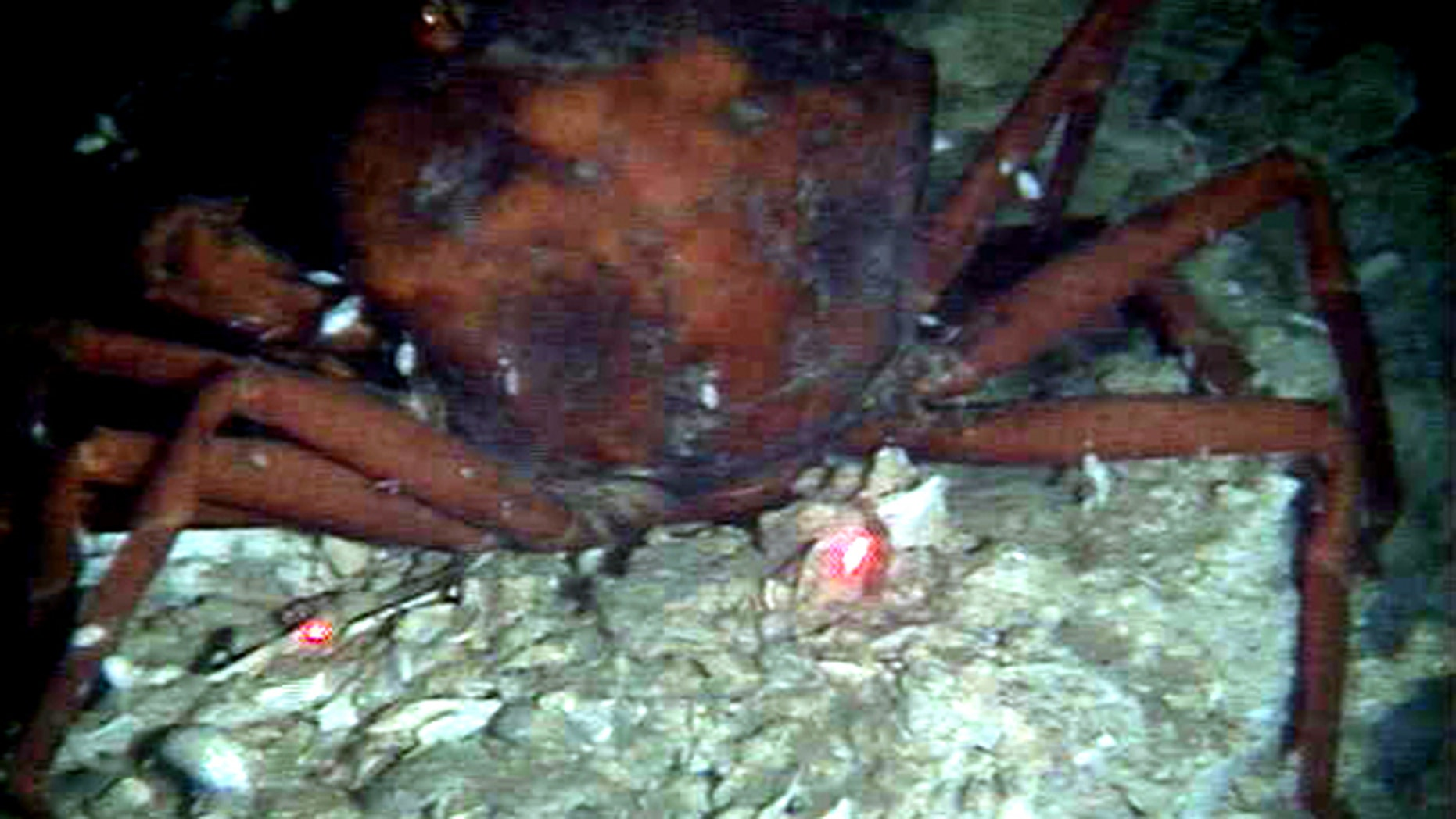 This Dec. 1, 2010 photo provided by the University of Georgia, made from the submarine Alvin, shows a dead crab with oil residue near it on a still-damaged sea floor about 10 miles north of the BP oil rig accident.