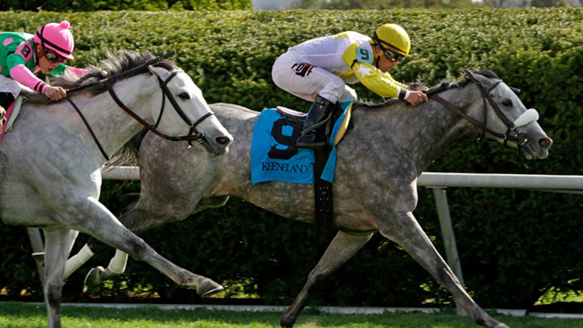 Hard Not to Like, right, with Javier Castellano aboard, outlasts Discreet Marq, left, with Irad Ortiz Jr. aboard, to win the Jenny Wiley Stakes horse race on the turf course at Keeneland in Lexington, Ky., Saturday, April 12, 2014. (AP Photo/Garry Jones)