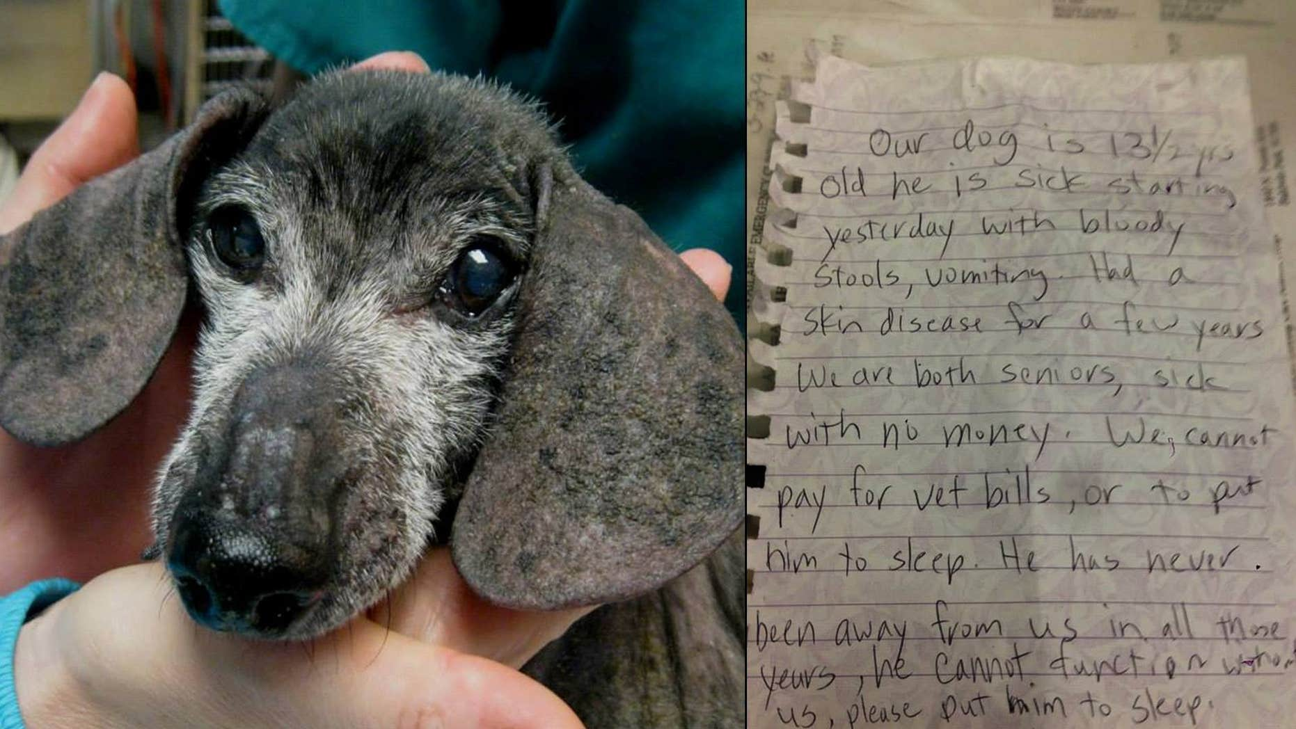 """Leave No Paws Behind, Inc. posted a photo of 13-year-old """"Otto"""" on the rescue group's Facebook page."""