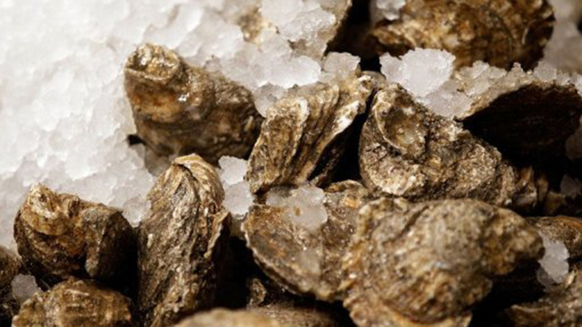 Oysters are important to ecosystems because they filter impurities from water -- yet the delicious mollusks are rapidly vanishing from the world's waterways.
