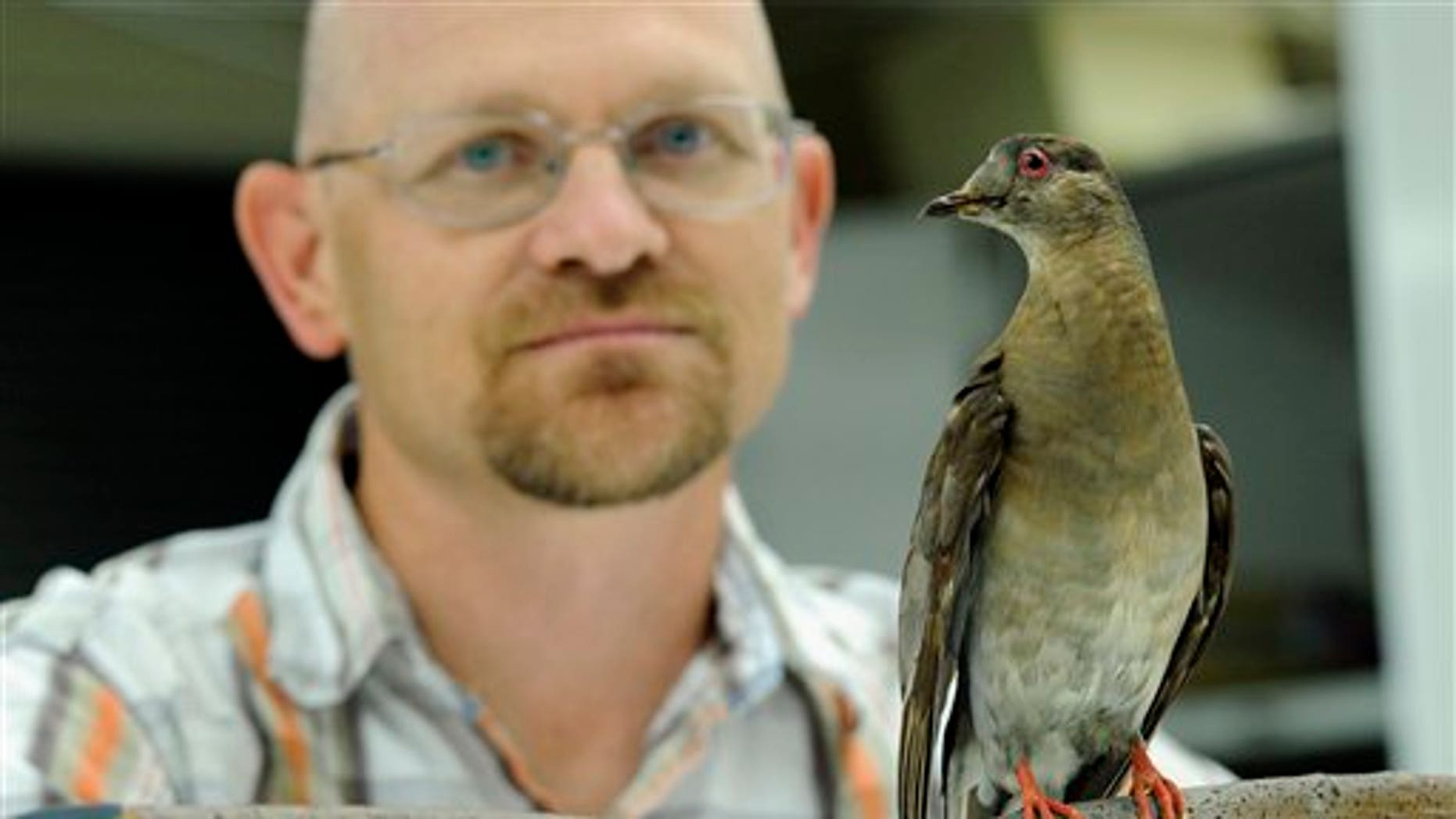 Smithsonian ornithologist Brian Schmidt posing for a photo with Martha, an extinct passenger pigeon, once the most plentiful bird on the planet, who went extinct in September 1914.