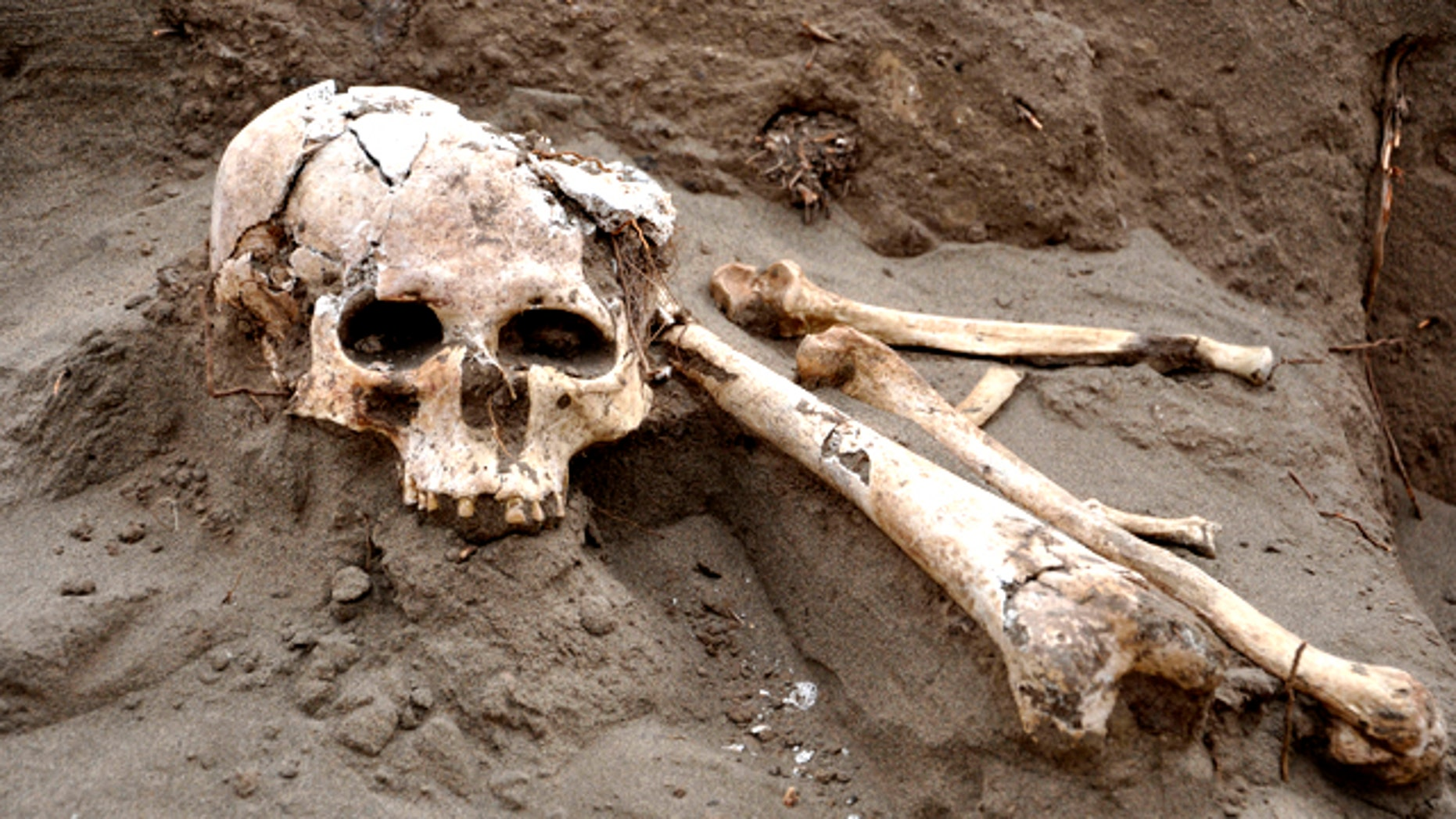 July 15, 2011: A skull and bones sit on a pre-hispanic tomb recently discovered in Lambayeque, northern Peru. According to Carlos Wester, chief of the team of archaeologists who discovered the tomb, it belongs to a top lord of the Lambayeque culture, believed to have been an executioner.