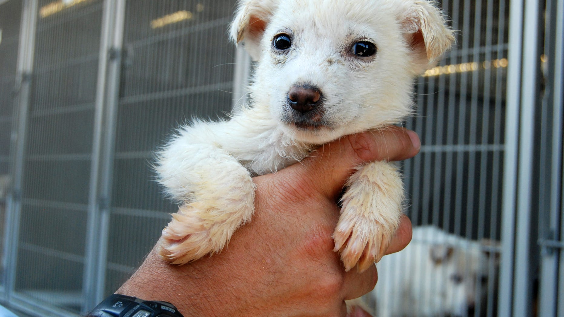 July 5, 2013: This image provided by the San Bernardino County Animal Shelter in San Bernardino, Calif., shows a dog held by Supervising Animal Control Officer Doug Smith at the shelter.