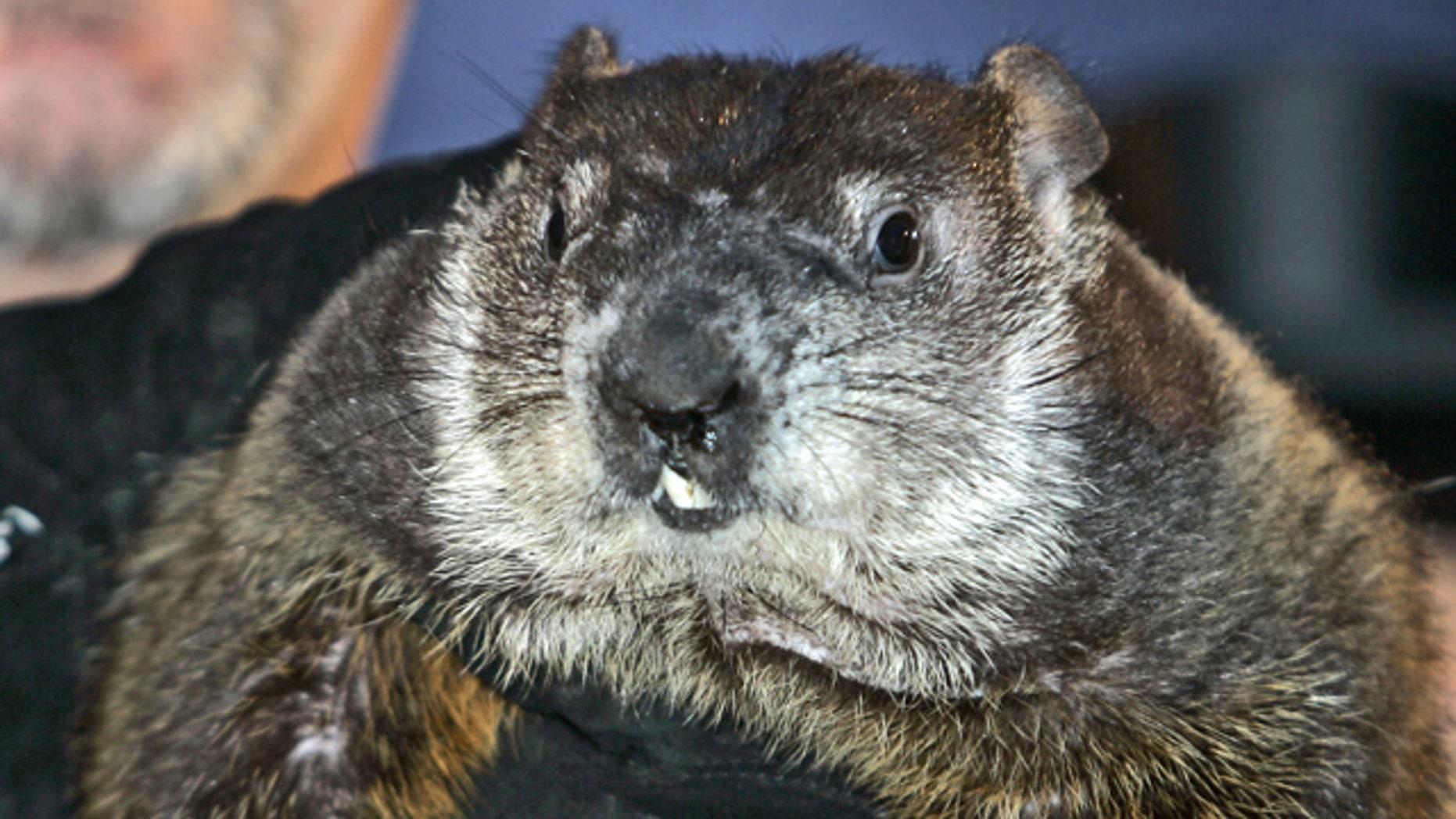 Feb. 2, 2007: Punxsutawney Phil, the weather-predicting groundhog, is held up by his handlers in Punxsutawney, Pa. (AP)