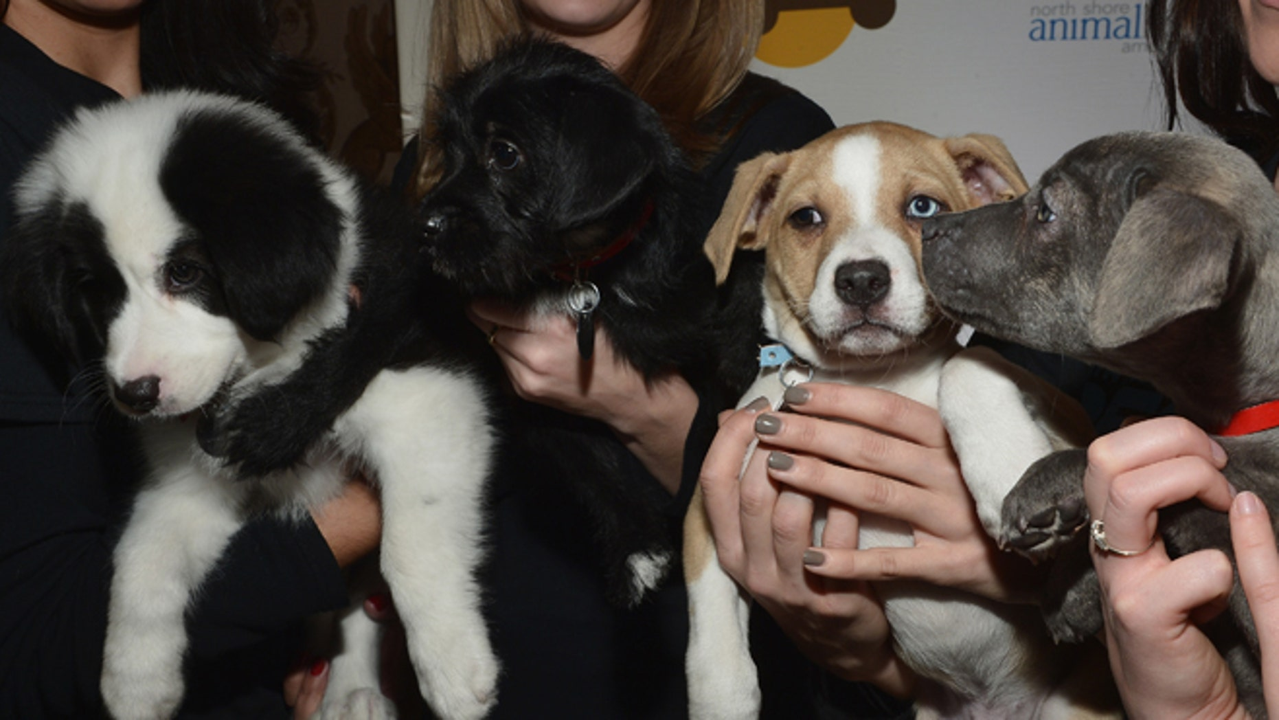 NEW YORK, NY - NOVEMBER 22:  A view of puppies at the 2013 Animal League America Celebrity gala at The Waldorf=Astoria on November 22, 2013 in New York City.  (Photo by Mike Coppola/Getty Images)