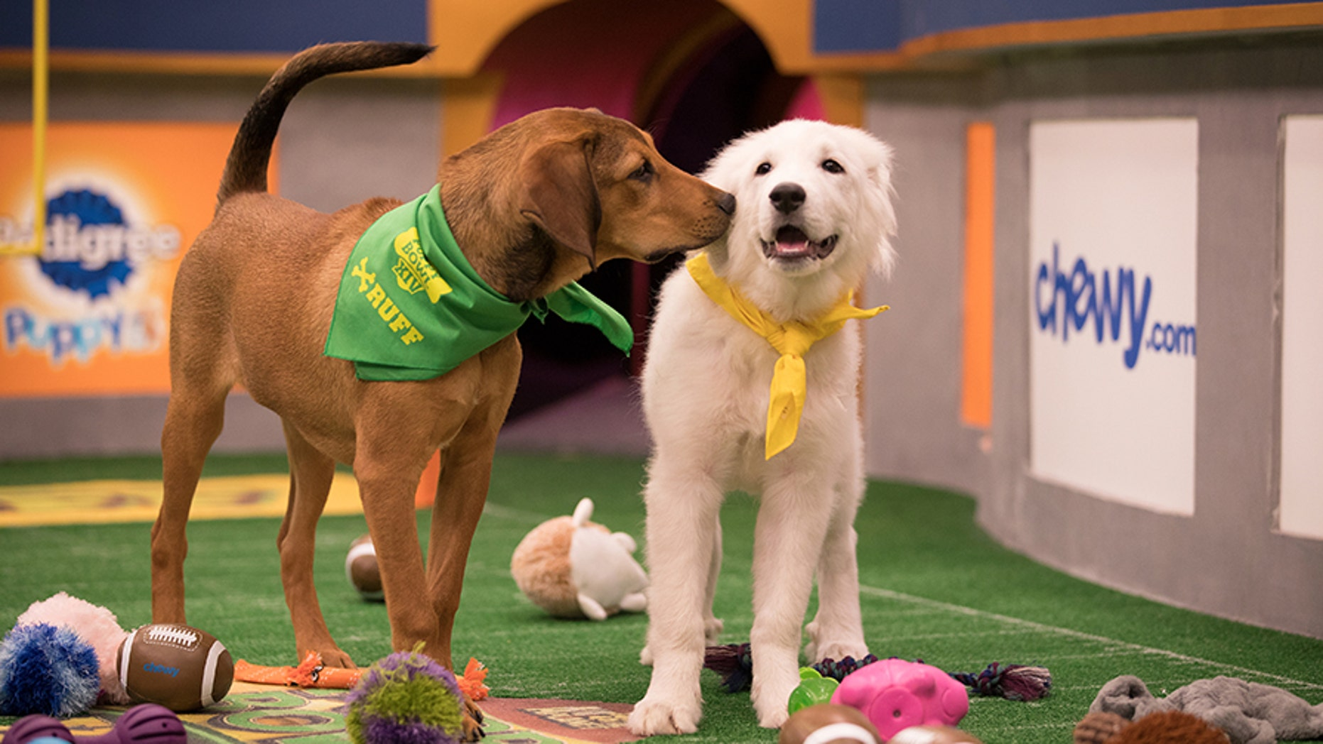 Puppy Bowl XIV will air at 3 p.m. ET on Feb. 4 on Animal Planet.