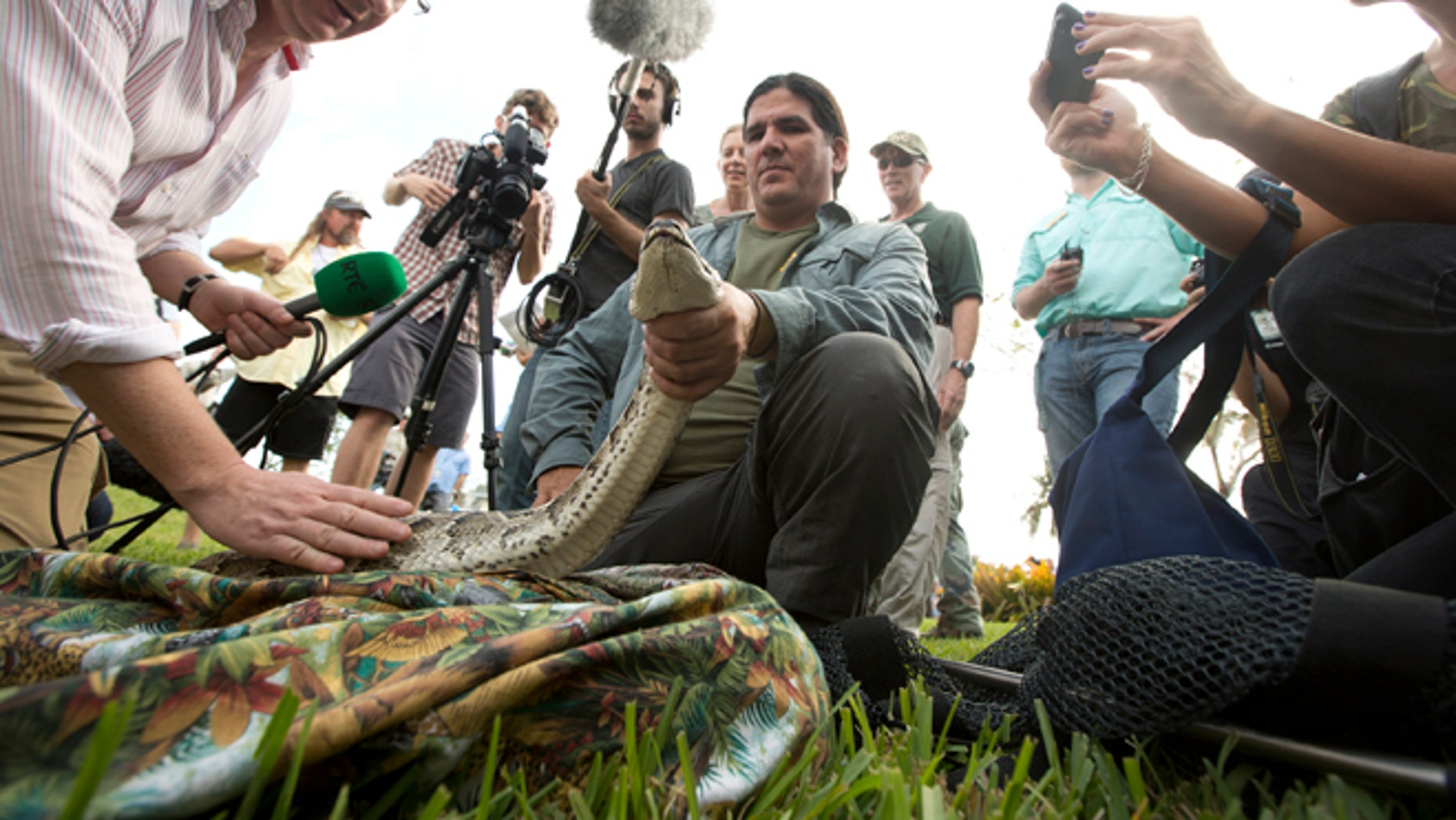 Jan. 12: Capt. Jeff Fobb from the Miami-Dade Fire Rescue's Venom Response Unit, holds a python during the kick-off of the 'Python Challenge' in Davie, Fla.