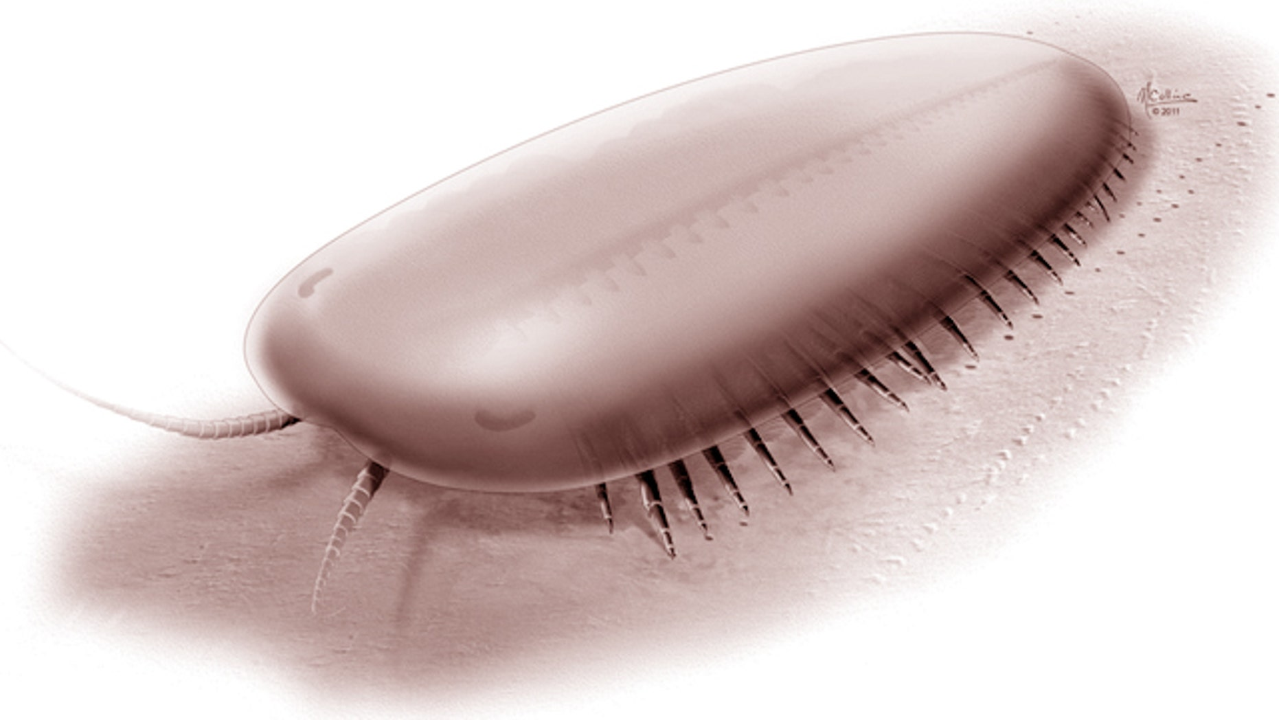 An artist's rendering of a Tegopelte, a foot-long arthropod that lived 500 million years ago.