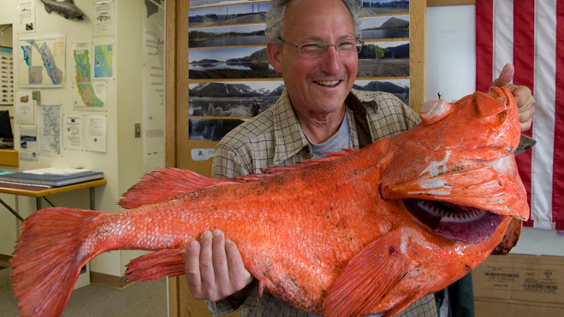June 21: Sport fisherman Henry Liebman, from Seattle, holds his shortraker rockfish at the Alaska Department of Fish and Game office.