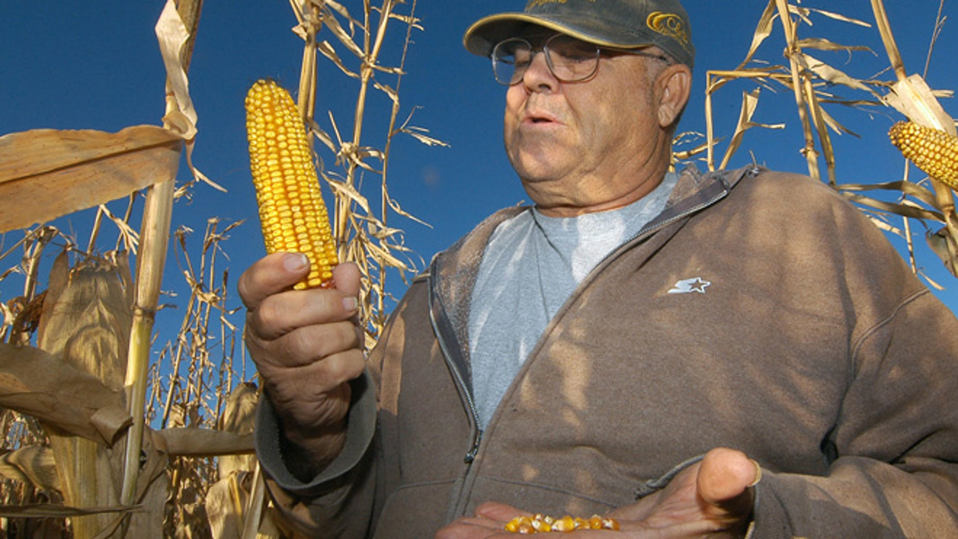 In this Oct. 24, 2013, photo Robert Malsom checks corn in one of his fields near Roscoe, S.D. Malsam nearly went broke in the 1980s when corn was cheap. So now that prices are high and he can finally make a profit, he's not about to apologize for ripping up prairieland to plant corn.