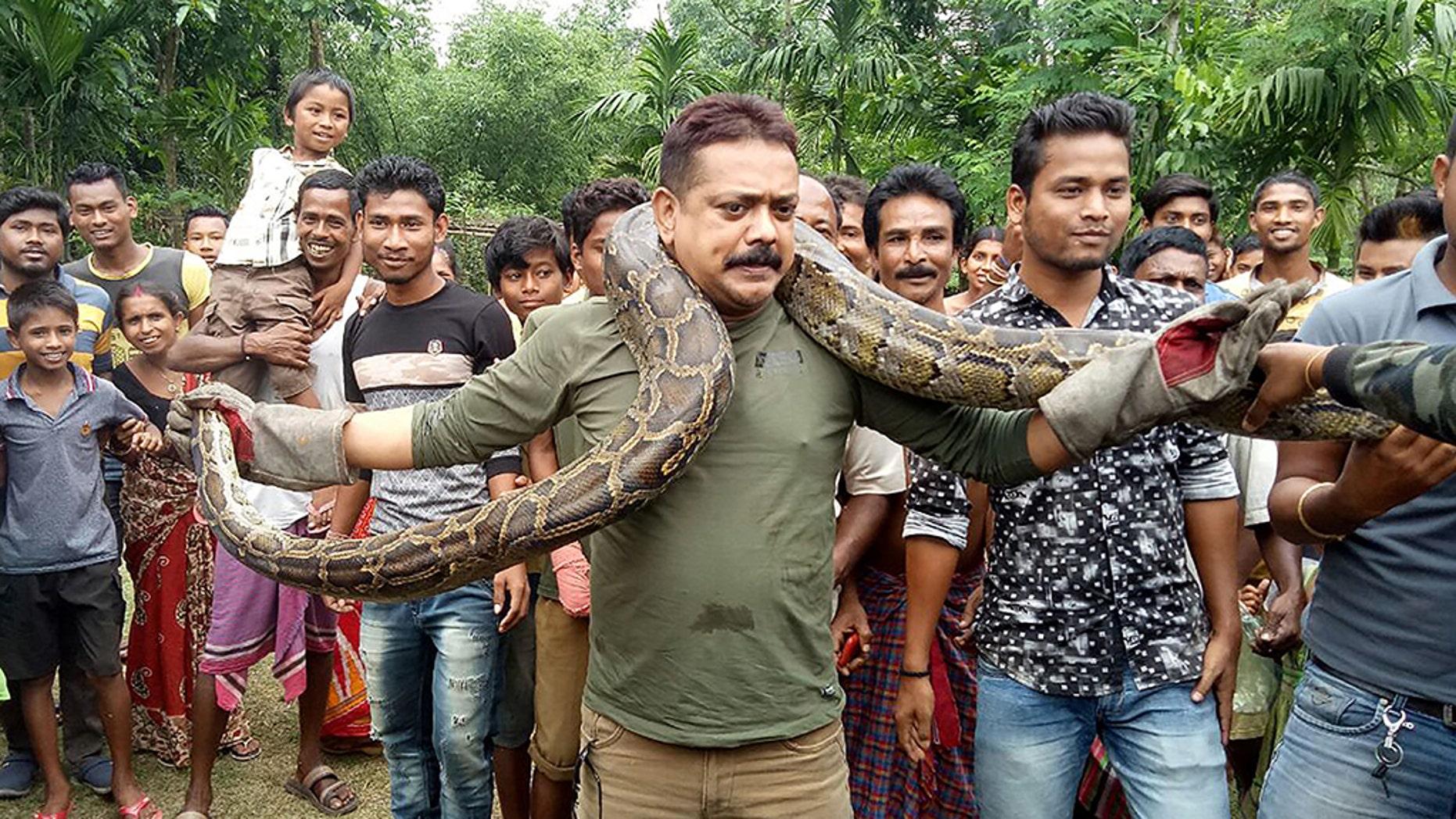 Forest ranger officer Sanjay Dutta (C), holds a 30 feet long python weighing 90lbs at Sahebbari village in Jalpaiguri district