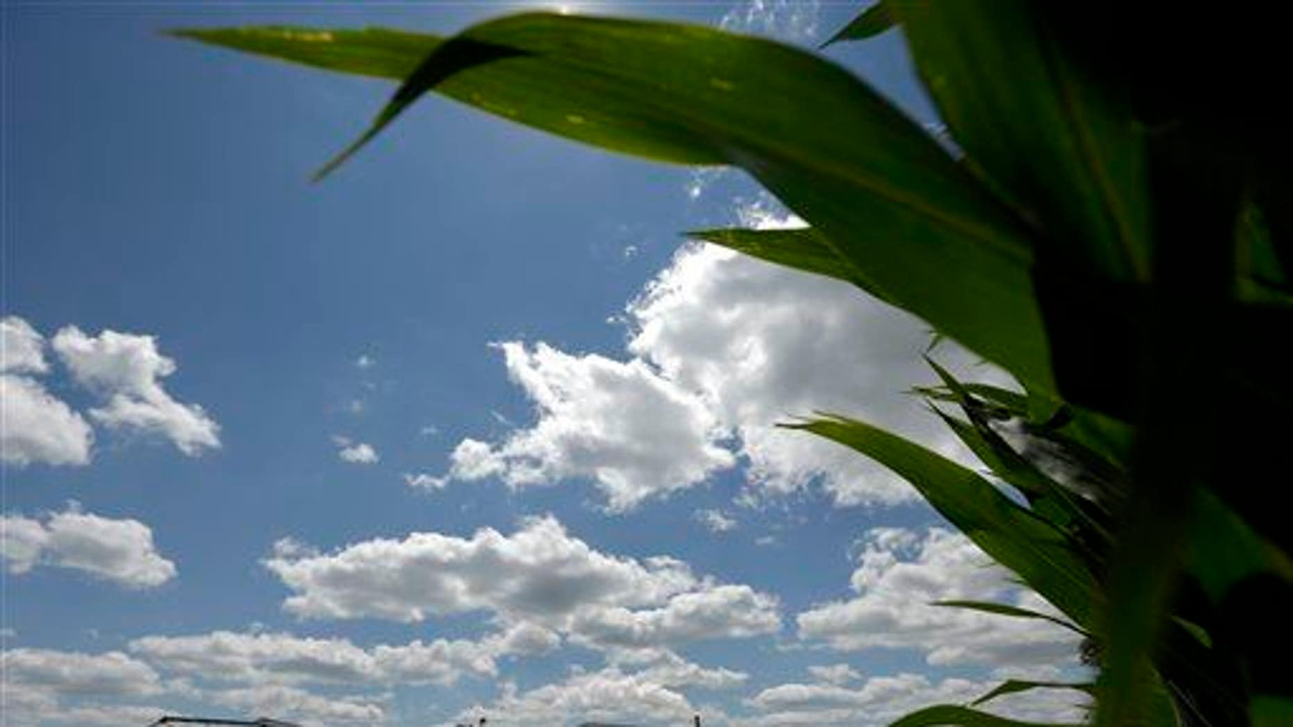 In this July 20, 2013 file photo, a plant that produces ethanol is next to a cornfield near Coon Rapids, Iowa.