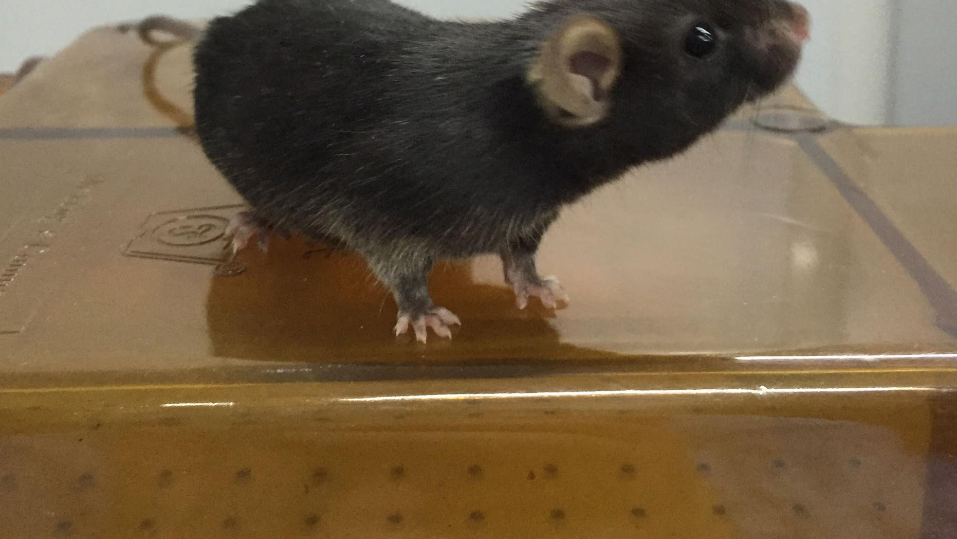 Scientists at the University of Virginia were able to use magnetic fields to control the brains of living mice.