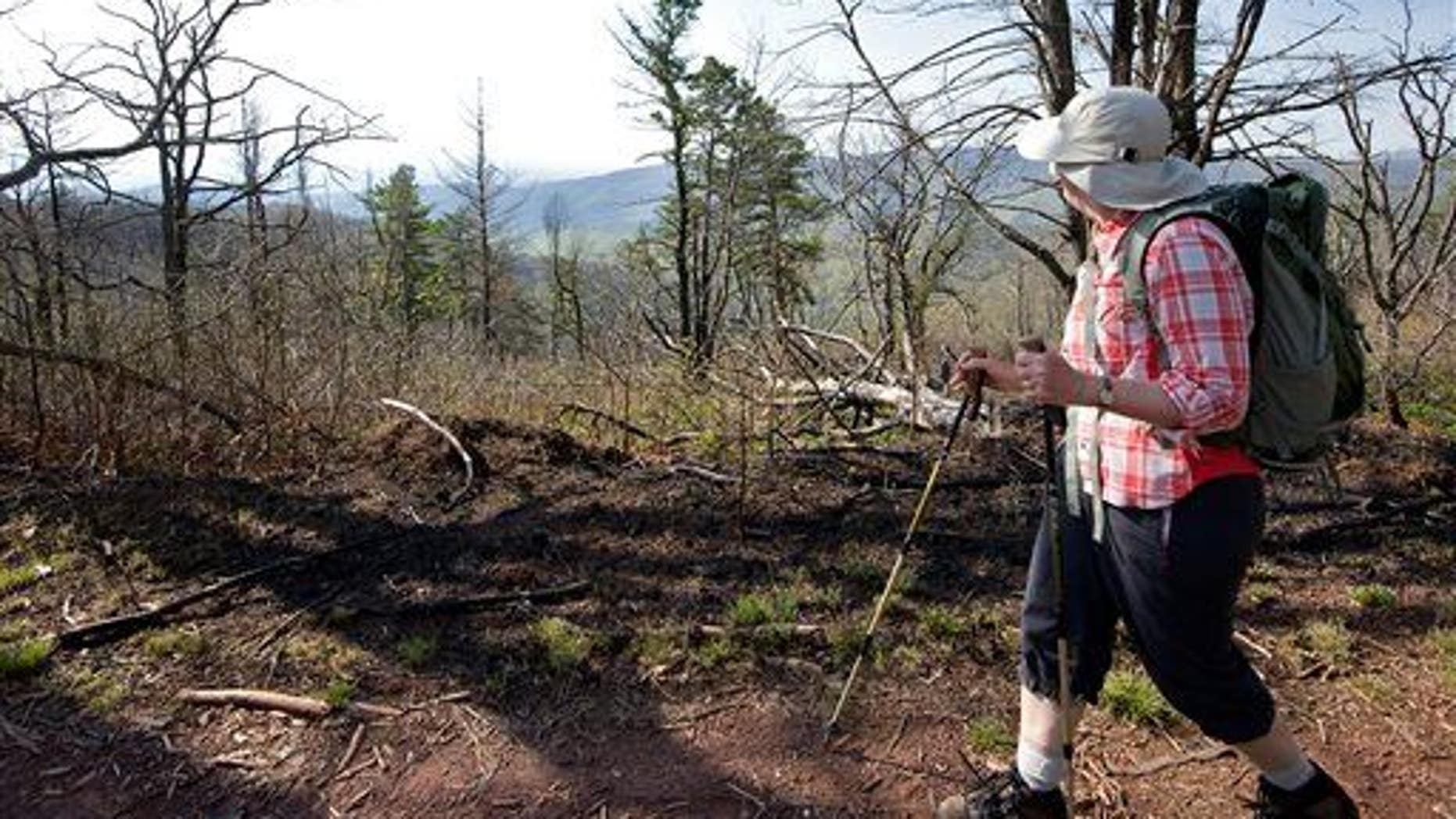 In this May 10, 2013 file photo, a woman looks out at the view while hiking the Mines Run Trail, on Shenandoah Mountain, Va.