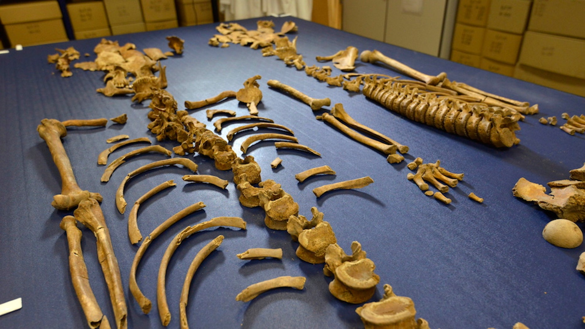 Scientific tests revealed that human remains found in mass graves are those of 17th-century Scottish soldiers.