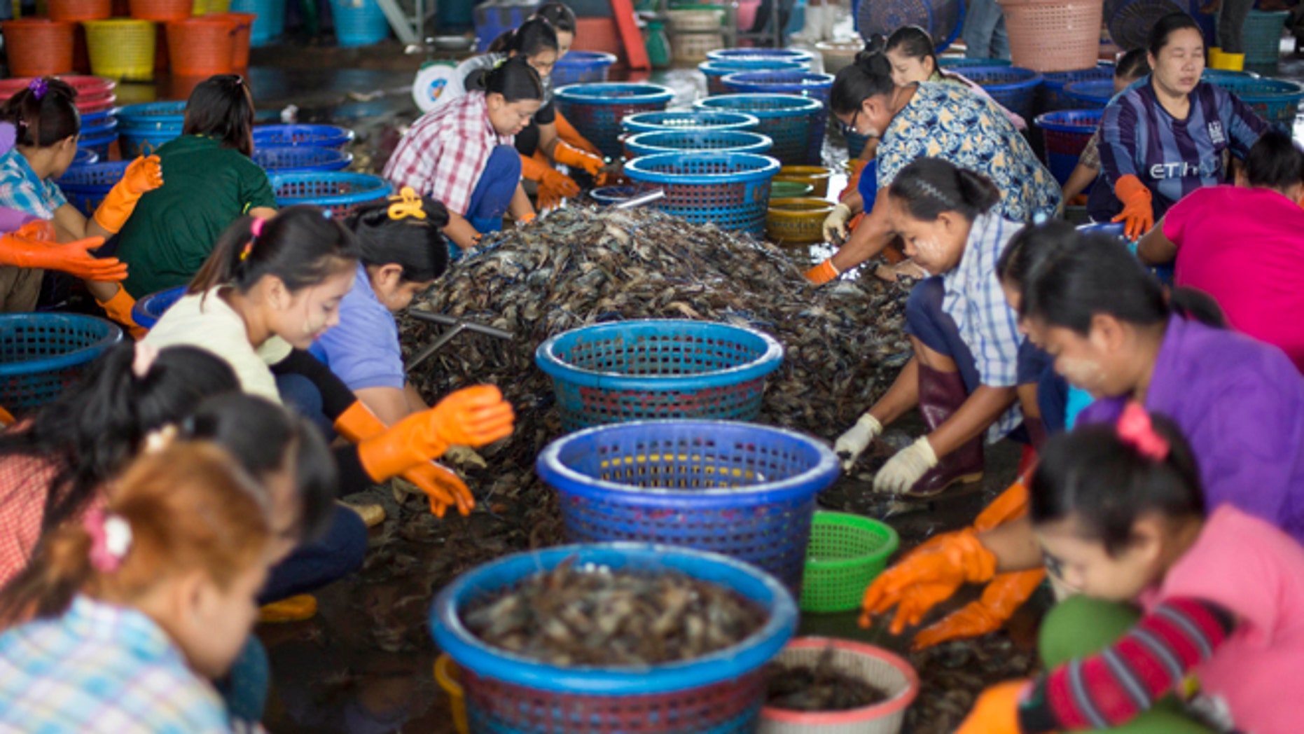 Sept. 3, 2015 photo, female workers, wearing a yellow-white cosmetic paste known as thanka on their cheeks, sort shrimp at a seafood market in Mahachai, Thailand.