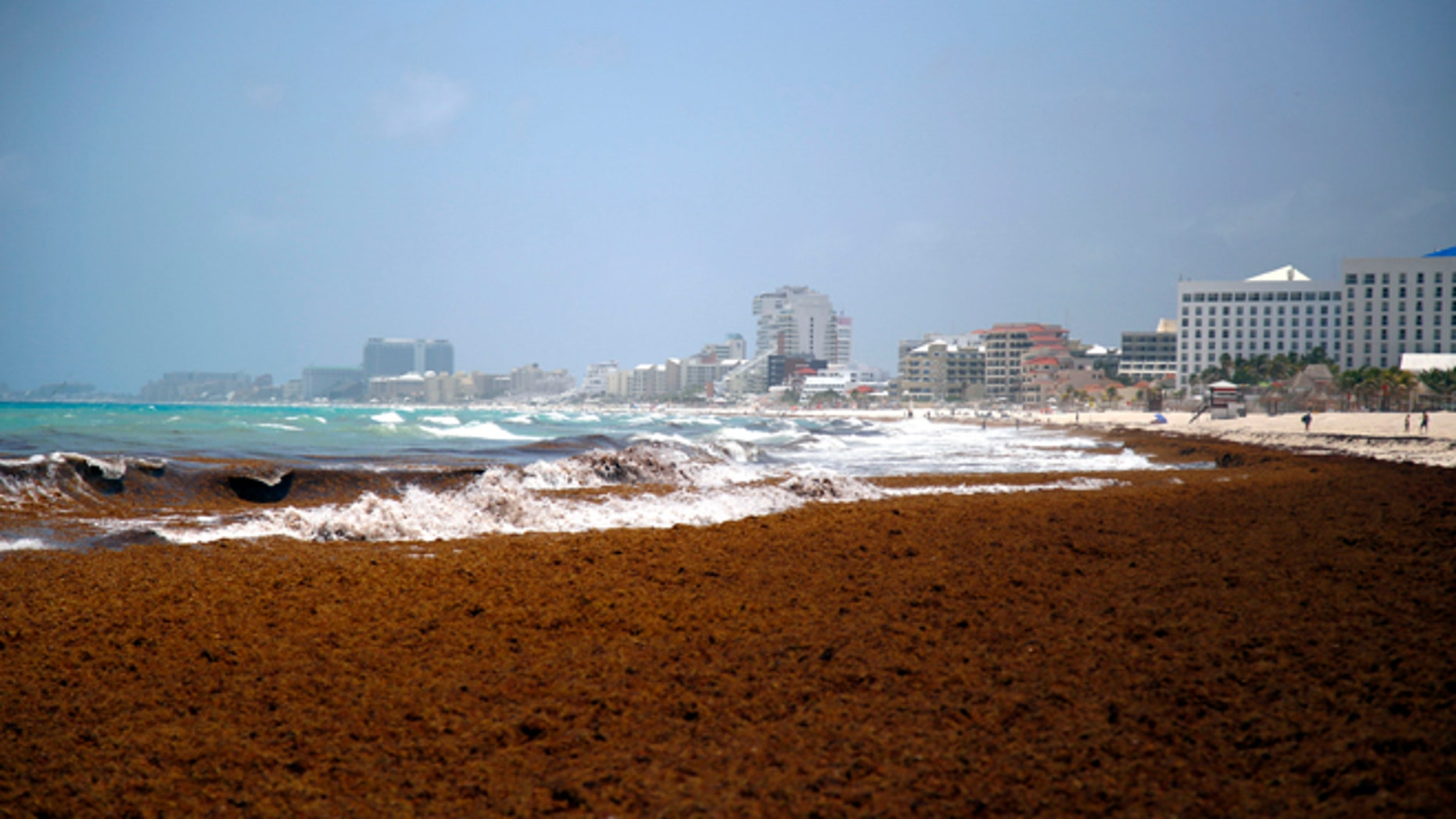 Large quantities of seaweed blanket the beach in the Mexican resort city of Cancun, Mexico, Wednesday, July 15, 2015. The seaweed invasion, which appears to have hit most of the Caribbean this year, is generally considered a nuisance and has prompted some hotel cancellations from tourists but scientists consider washed-up seaweed an important part of the coastal eco-system and plays a role in beach nourishment although some scientists have also associated the large quantities of seaweed this year in the Caribbean region with higher than normal temperatures and low winds, both of which influence ocean currents, and they draw links to global climate change. (AP Photo/ Israel Leal)