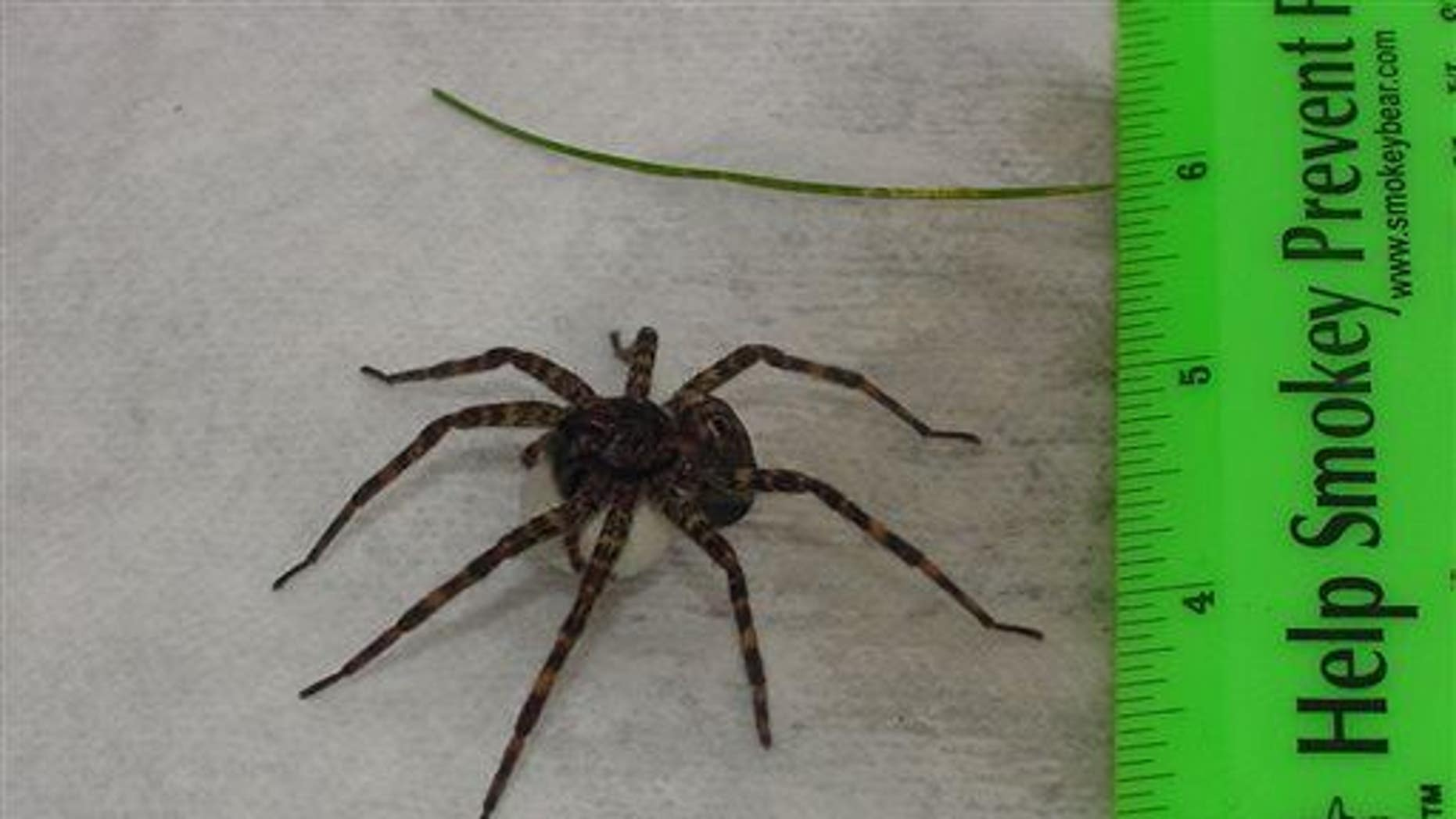 A man's fear of spiders was gone after surgery.