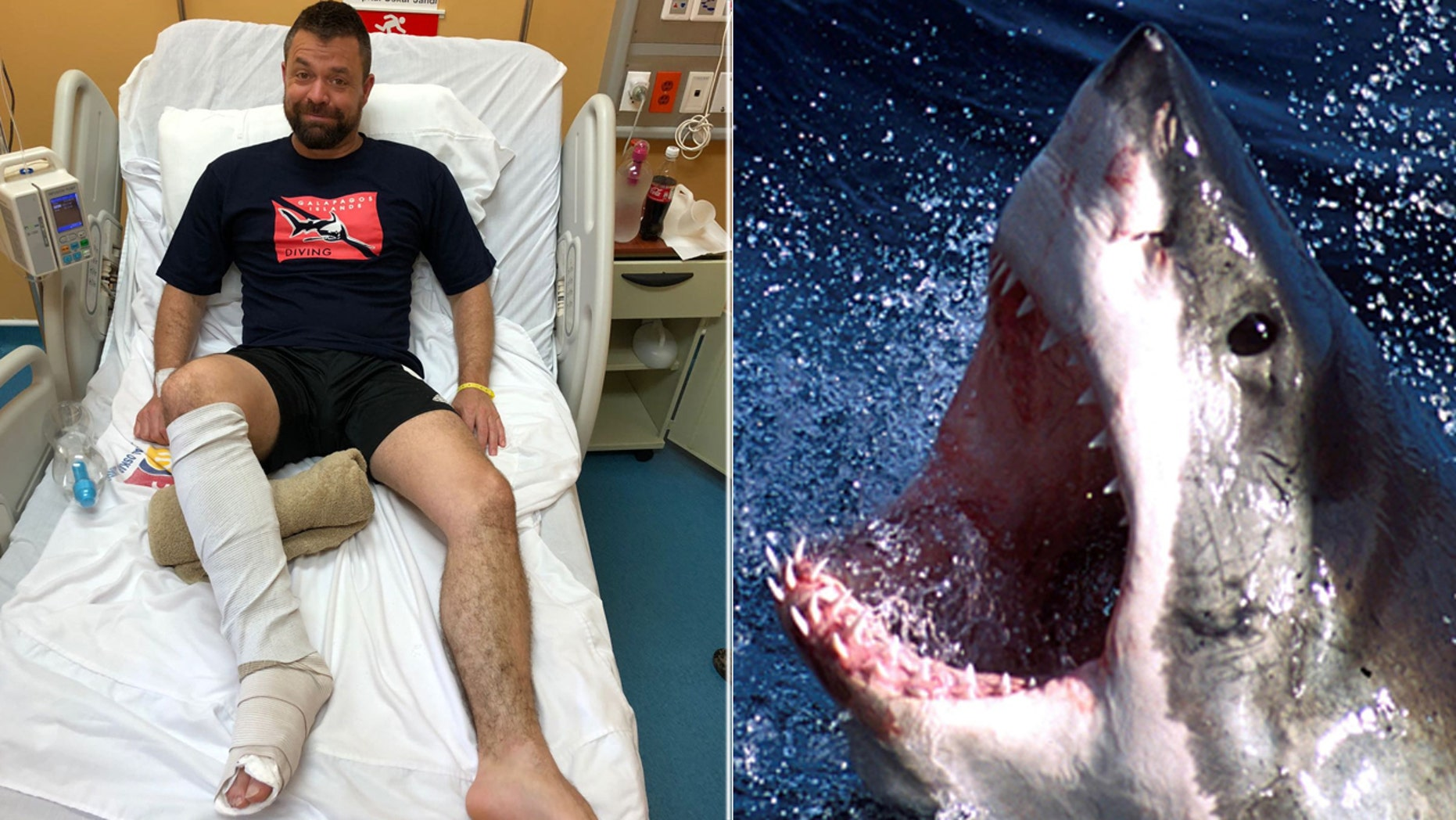 Andrew Newman recovering after the shark attack (Andrew Newman/SWNS.com)/Undated file photo of a great white shark (REUTERS/Seachangetechnology)