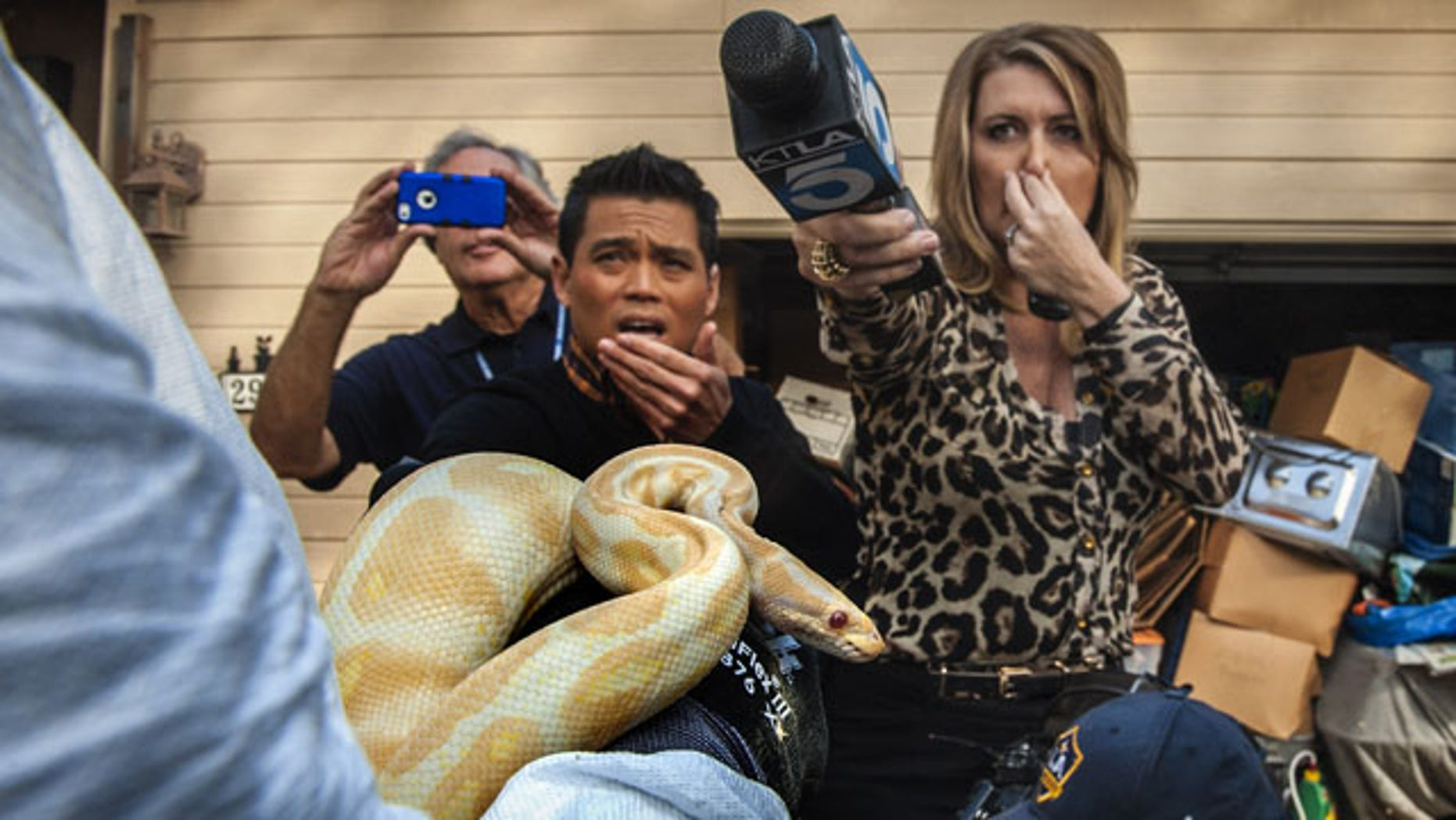 January 29, 2014: While interviewing Sondra Berg, Santa Ana Police Animal Services supervisor, television reporters Bobby DeCastro, from FOX11, and Wendy Burch, of KTLA 5 plug their noses to avoid the stench emanating from the house with of dead and decaying snakes in Santa Ana, Calif. Berg holds an albino ball python that was one of the surviving snakes in the home. (AP Photo/The Orange County Register, Bruce Chambers)