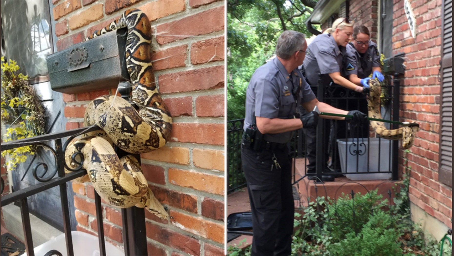 A Kansas letter carrier was unable to carry out some of those Postal Service duties on Friday, after finding a snake on someone's mailbox, police said.