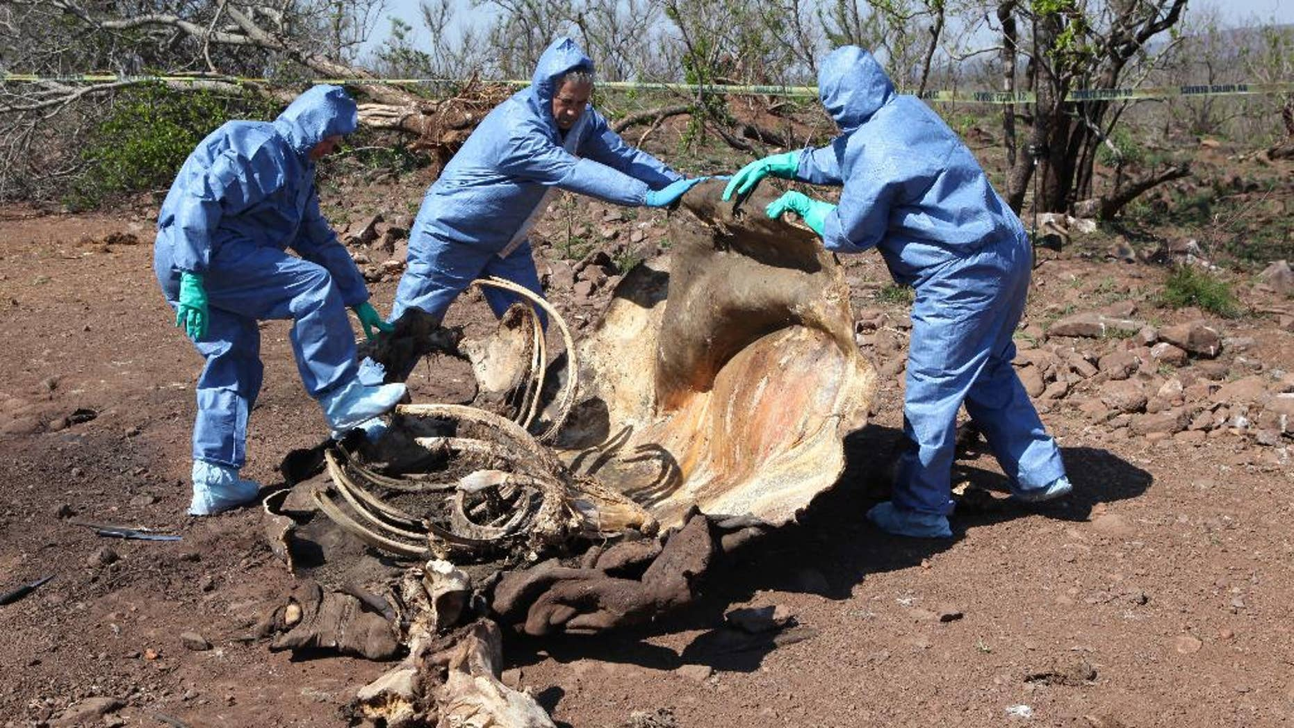 Nov. 20, 2014: In this file photo, investigators open the decomposed corpse of a poached rhino in search of forensic evidence, on the border with neighboring Mozambique near Skukuza, South Africa. (AP)