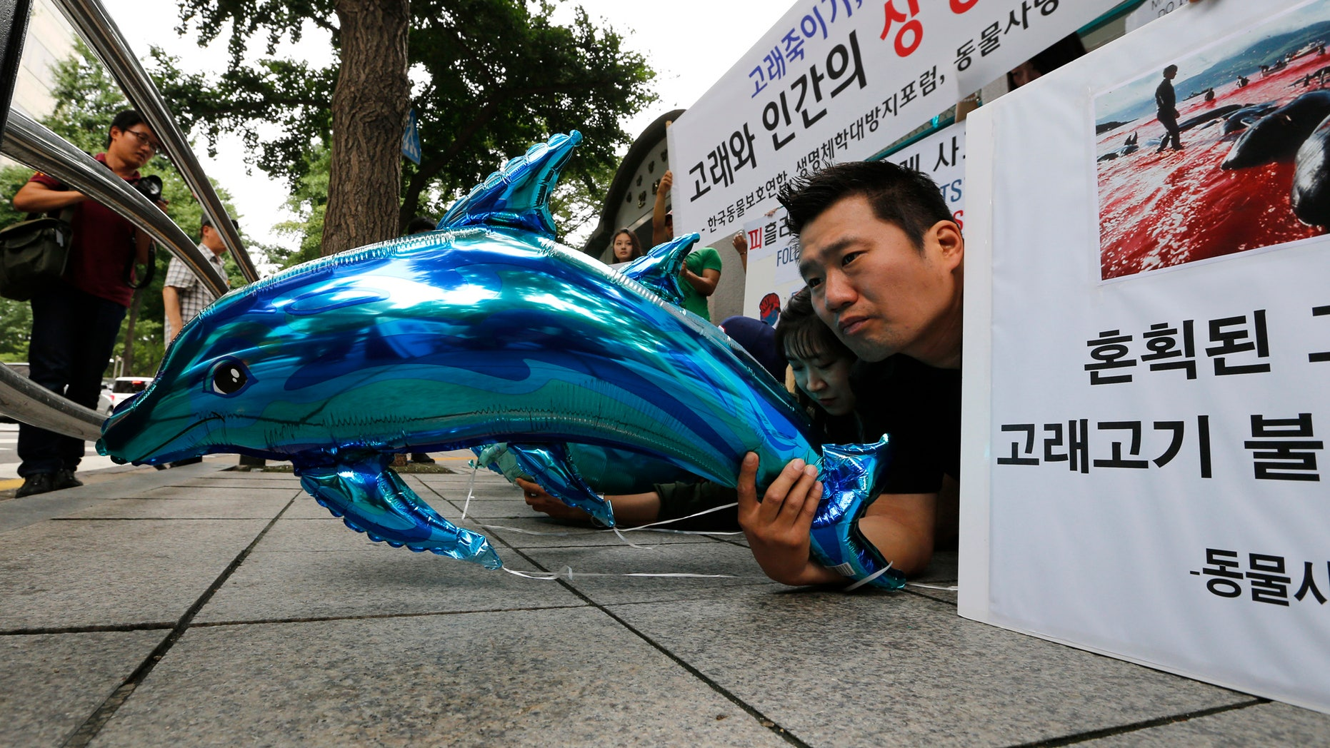 July 17, 2012: South Korean animal rights activists hold dolphin and whale-shaped balloons during a rally to oppose South Korean government's recent plan to resume whaling.