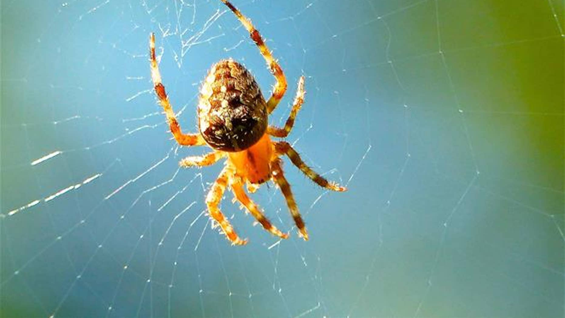 A new study found spiders can actually hear sounds from up to 16 feet away.