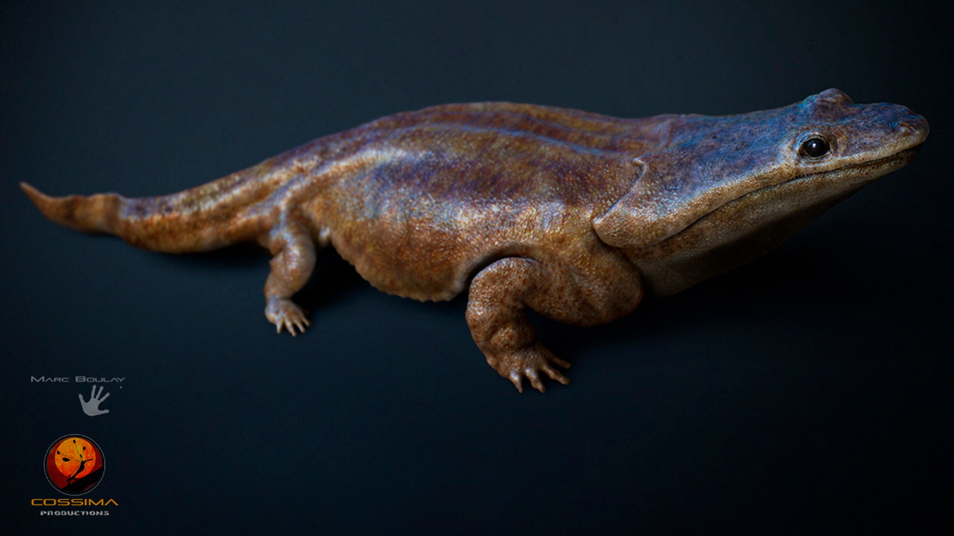 This image  made available by the University of Edinburgh  shows  an artist's rendition of a previously unknown species of crocodile-like 'super salamander.'