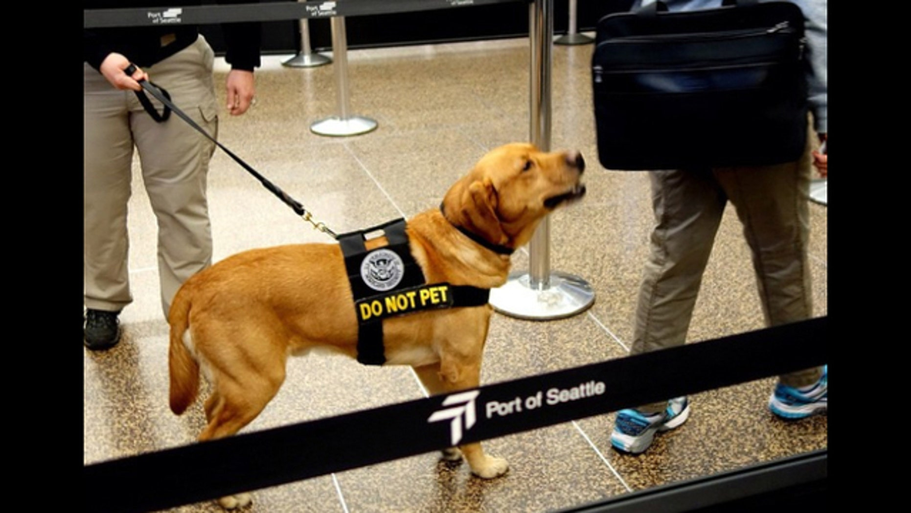 The Transportation Security Administration is seeking homes for retired bomb-sniffing dogs.