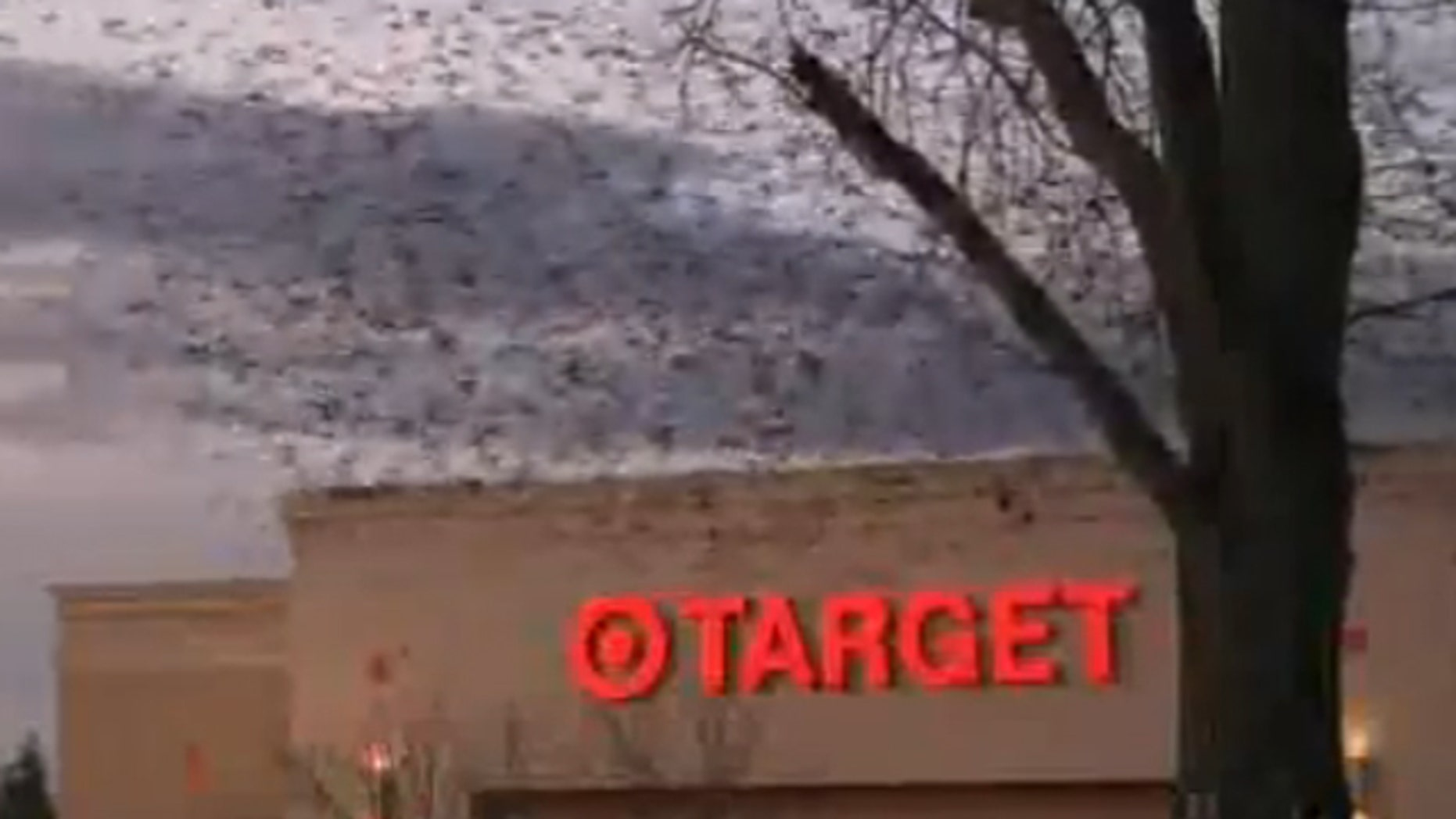 Hundreds of birds circle above the property at sunset before roosting in a row of oleander bushes on the west end of the store's parking lot.