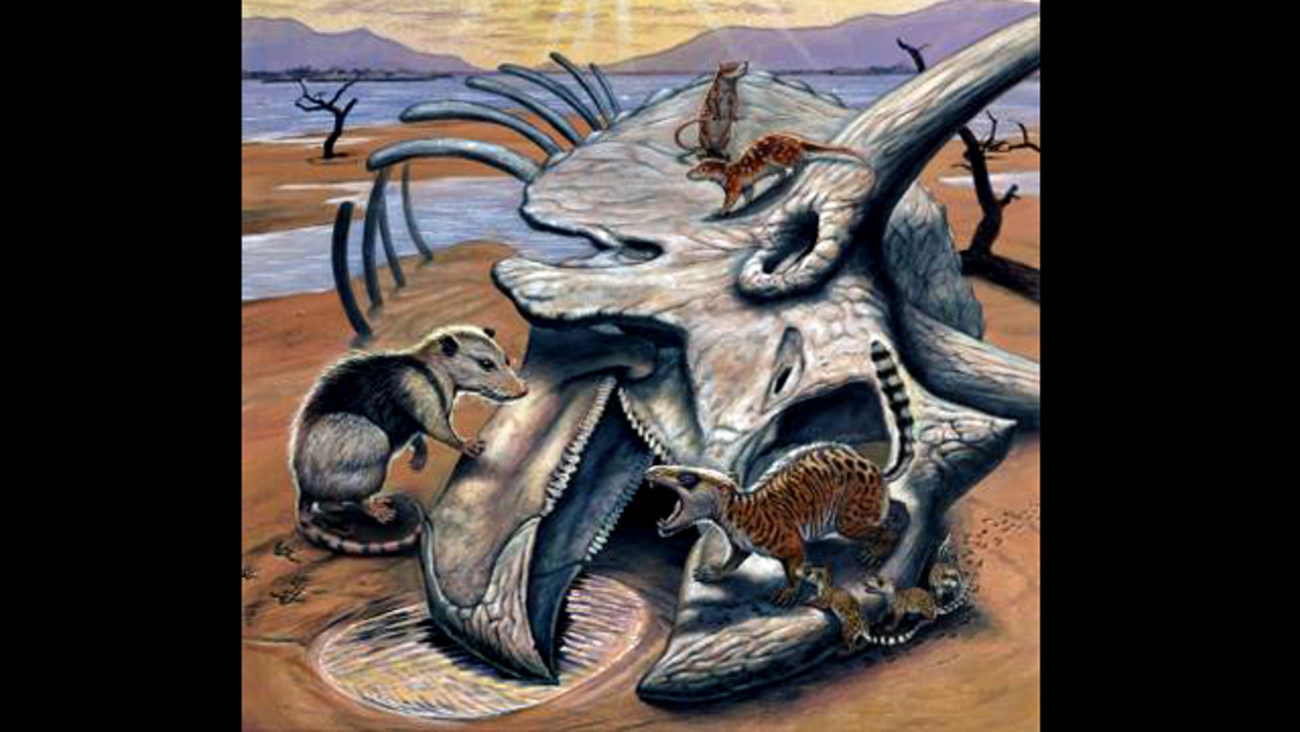 Three small primitive mammals walk over a Triceratops skeleton, one of the last dinosaurs to exist before the mass extinction that gave way to the age of mammals.
