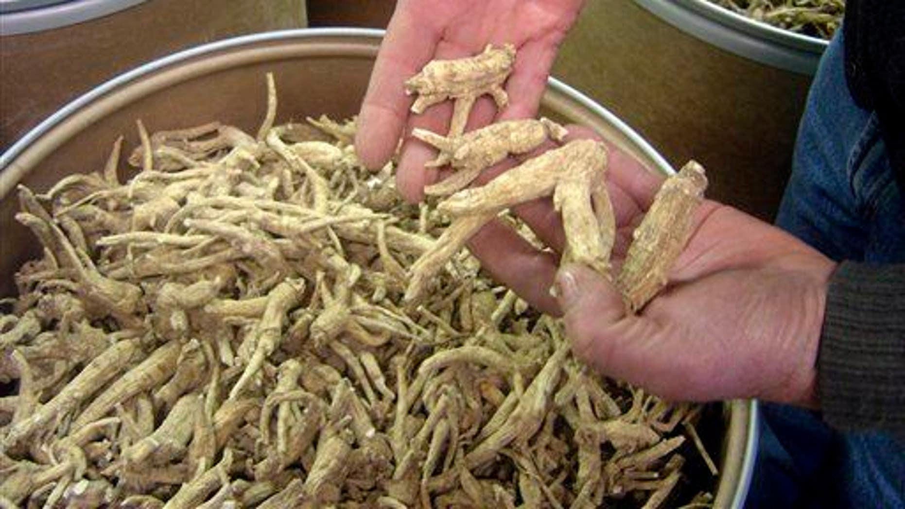 This Dec. 15, 2009 file photo shows ginseng roots at a ginseng-cleaning plant in Wausau, Wis. Wisconsin produces 90 percent of the nation's ginseng crop, most of which gets exported to China.