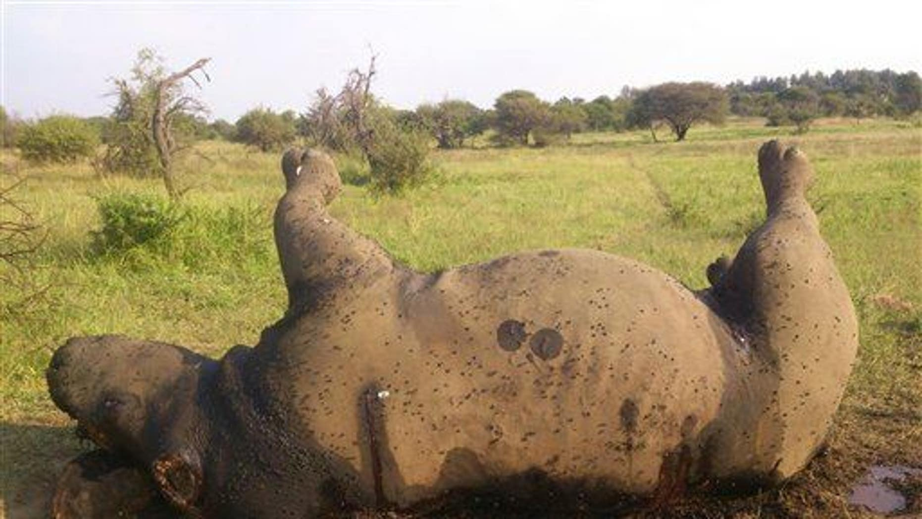 In this photo taken April 18, 2014, and supplied by the Dinokeng Game Reserve, the corpse of a poached rhino lies on the ground in Hammanskraal, South Africa.