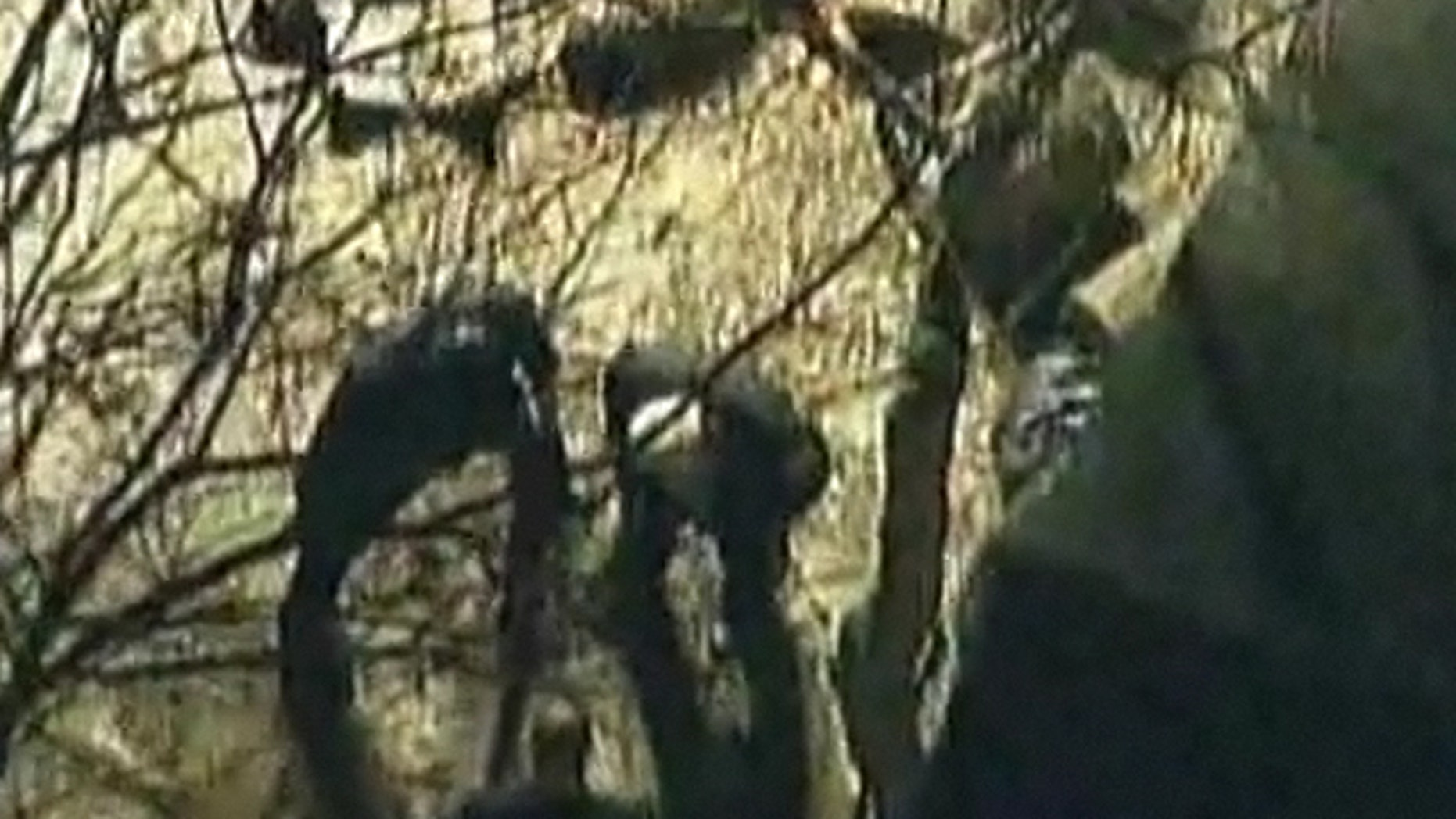 Mar. 12, 2012: Police search for a missing toddler in New Jersey.