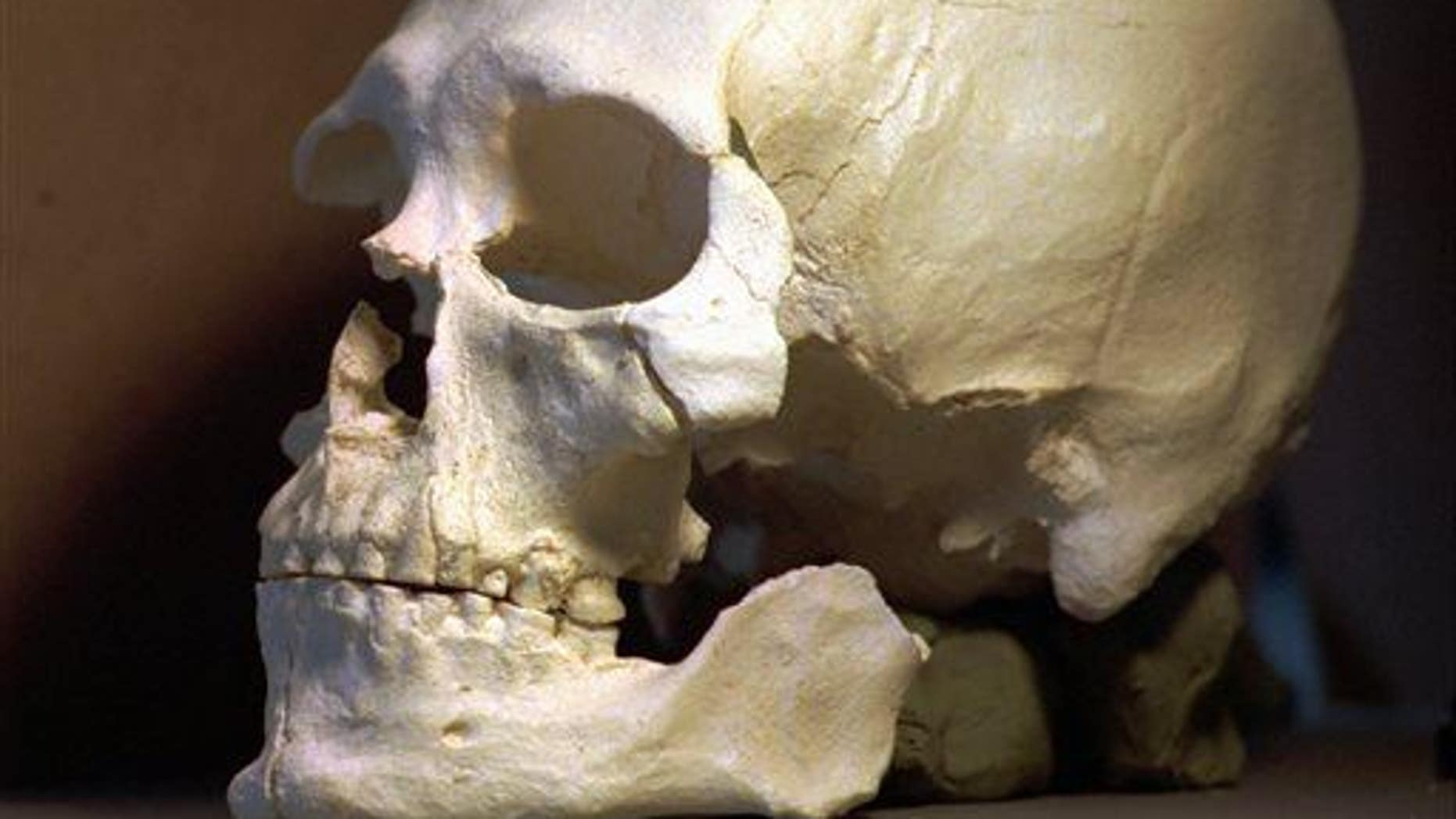 A file photo of a plastic casting of the skull of an ancient skeleton.