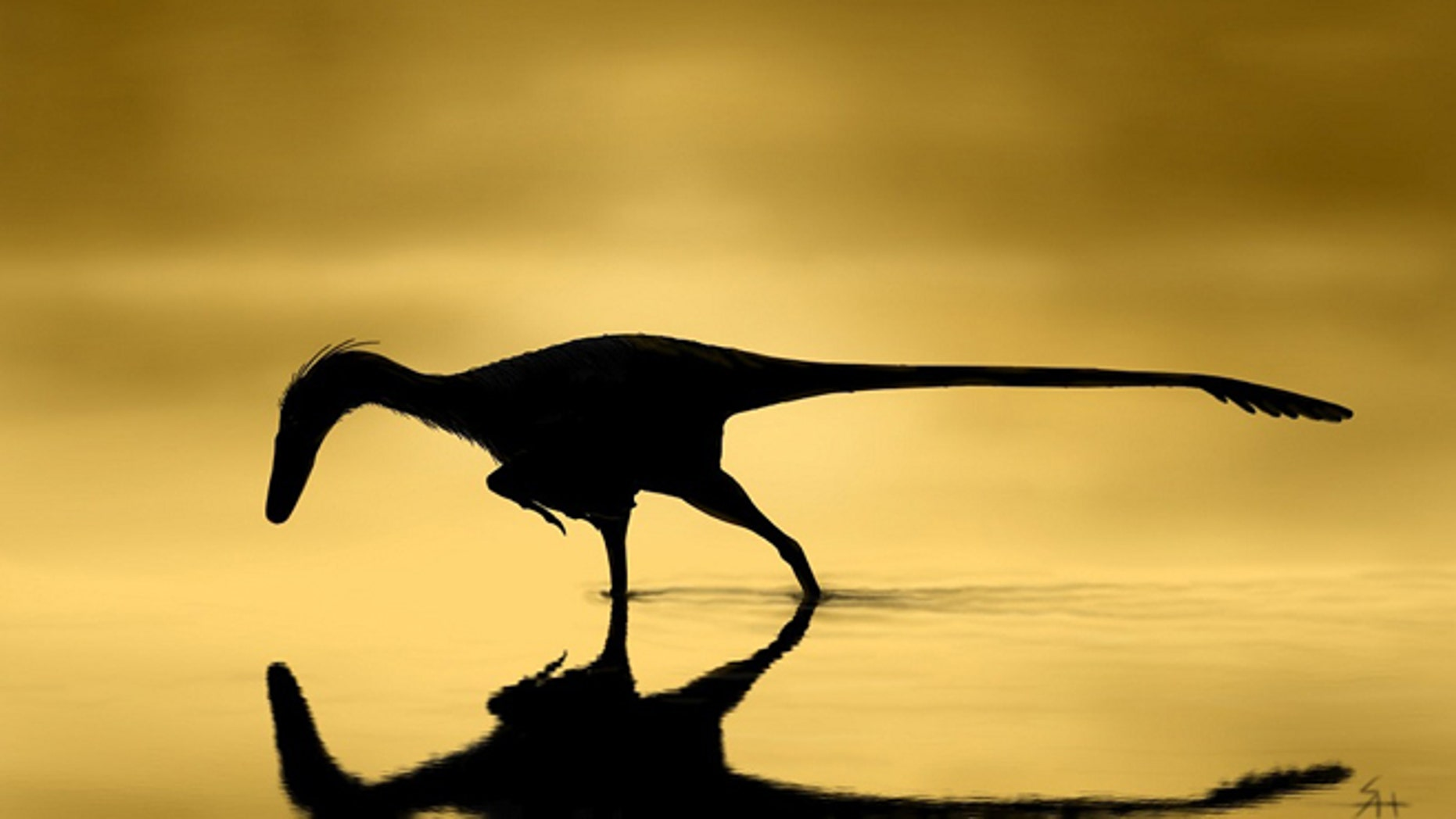 This image was created by Scott Hartman and shows the dinosaur Unenlagia comahuensis looking for fish at dawn.