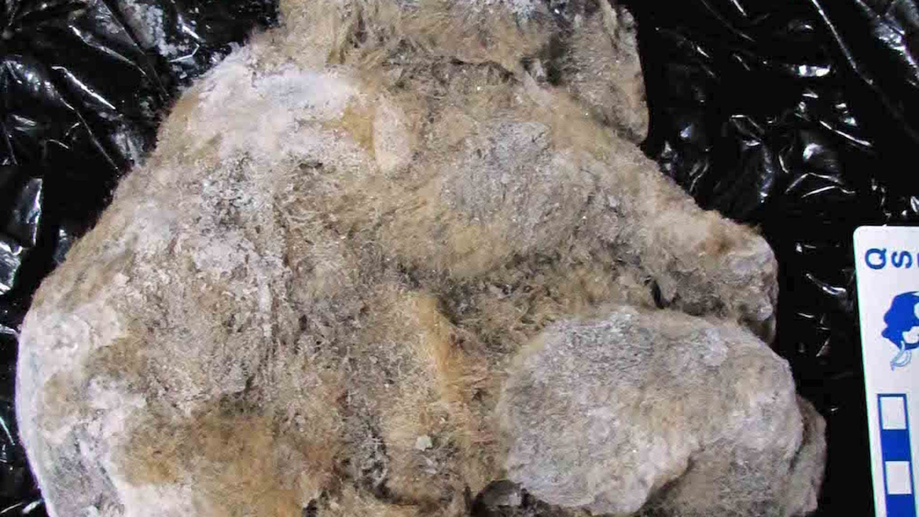 The ancient cave lion cub named Uyan is so well preserved that researchers could tell that its mother fed it milk a few hours before it died.