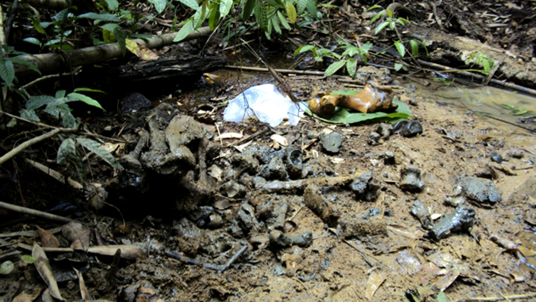 April 30: Bones of a Javan rhino lie on the ground at Cat Tien National Park in Dong Nai province, Vietnam. The creature, one of the world's rarest large mammals, has been found shot dead with its horn chopped off in the national park in southern Vietnam, a suspected victim of poachers, conservationists said.